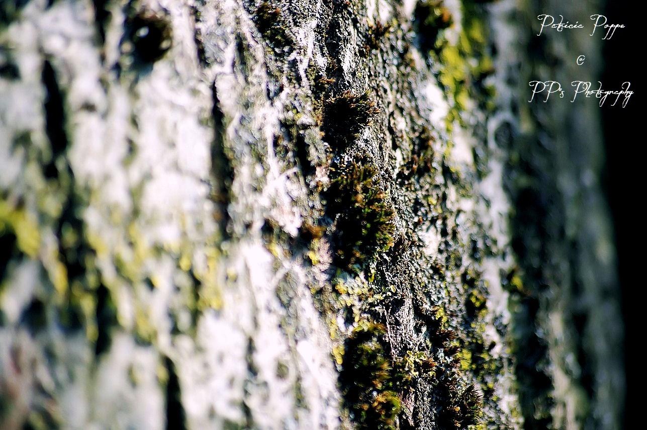 Bark by Patricia Poppe