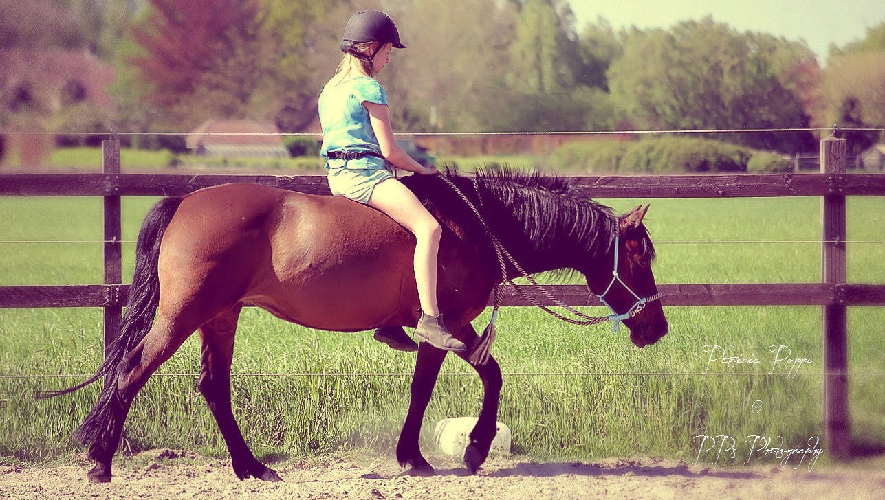Natural Horsemanship by Patricia Poppe