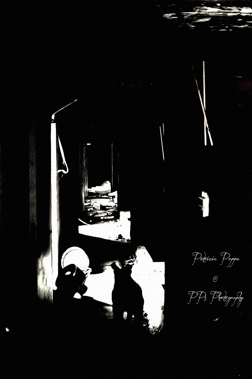 Lights by Patricia Poppe