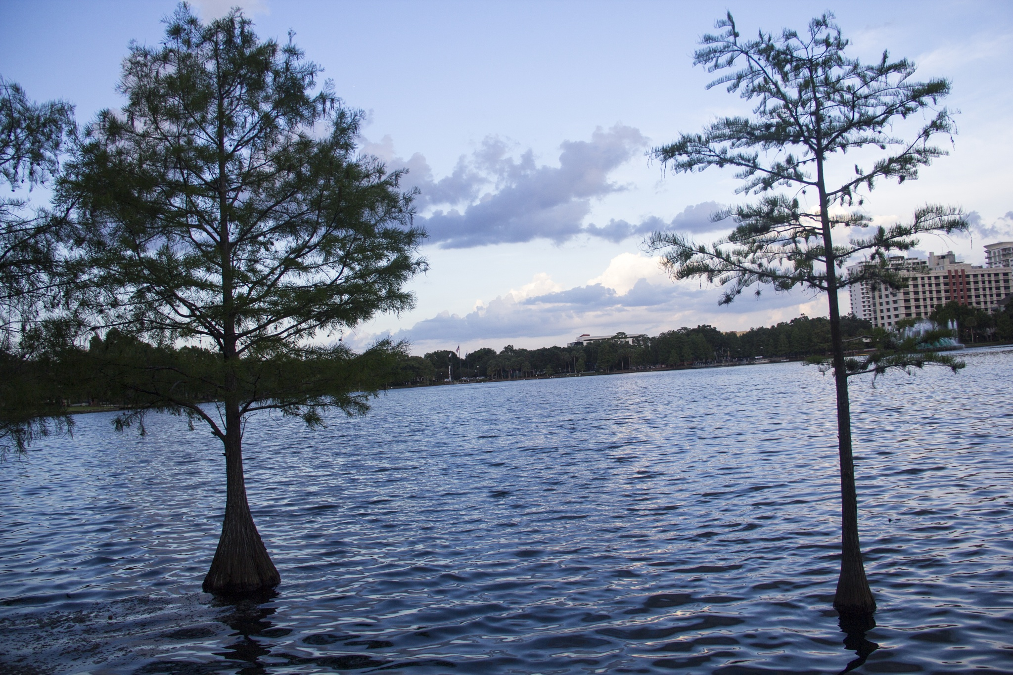 Orlando, Florida - where the trees grow in the water?! by Daniel Buchbinder