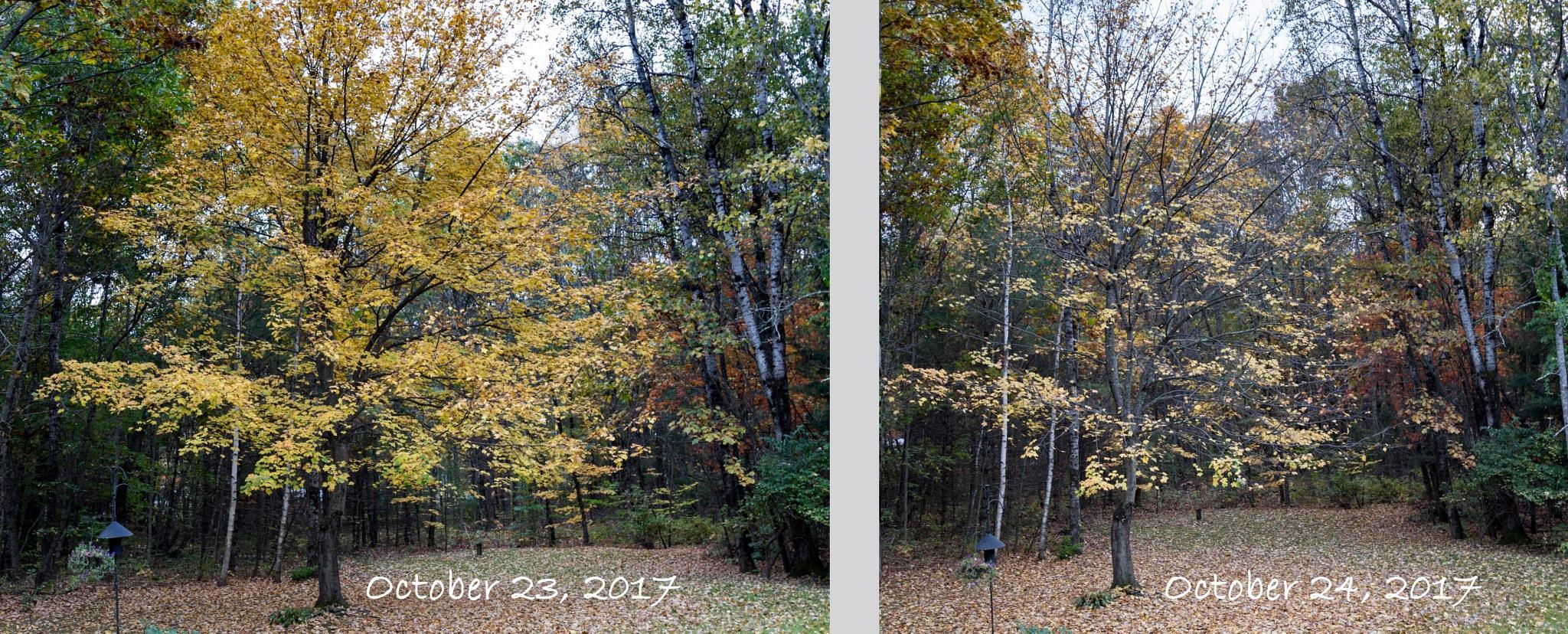 One Autumn Day by Daniel Buchbinder