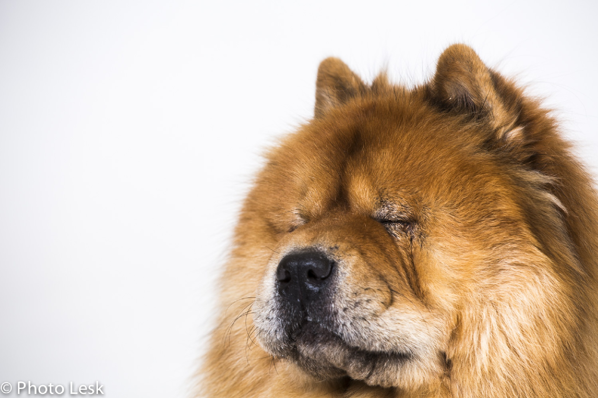 If I close my eyes hard enough -maybe I'll get a bone?? by PhotoLesk