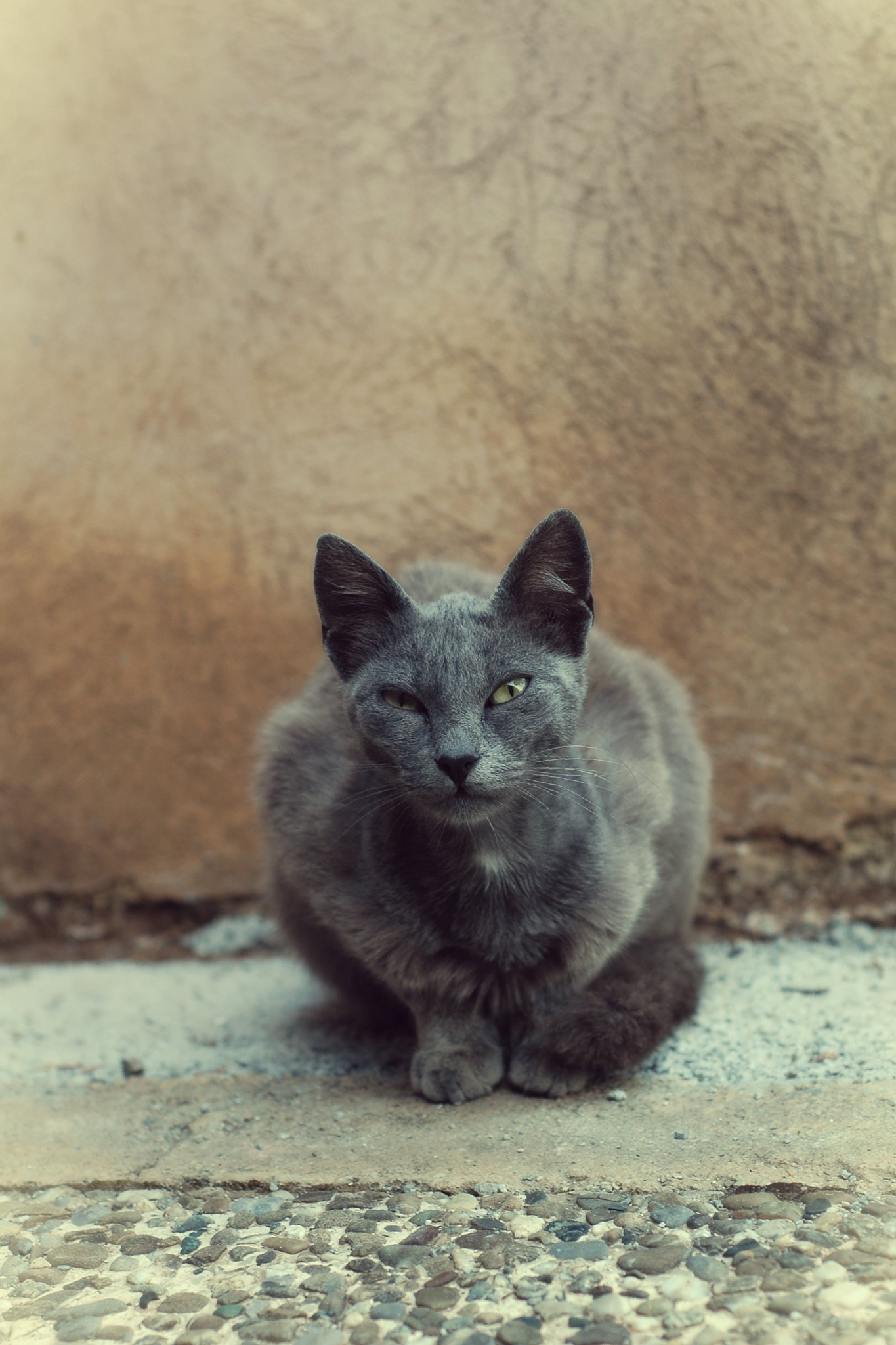 stray cat by nynke