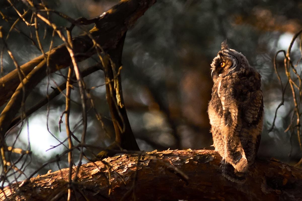 Hunting time by Kurbesov
