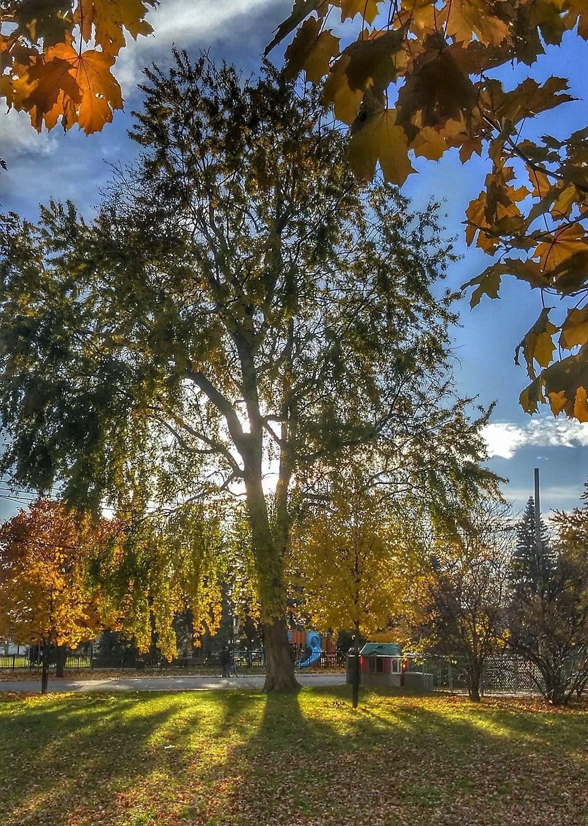 sunny fall day by Nicole Bergeron