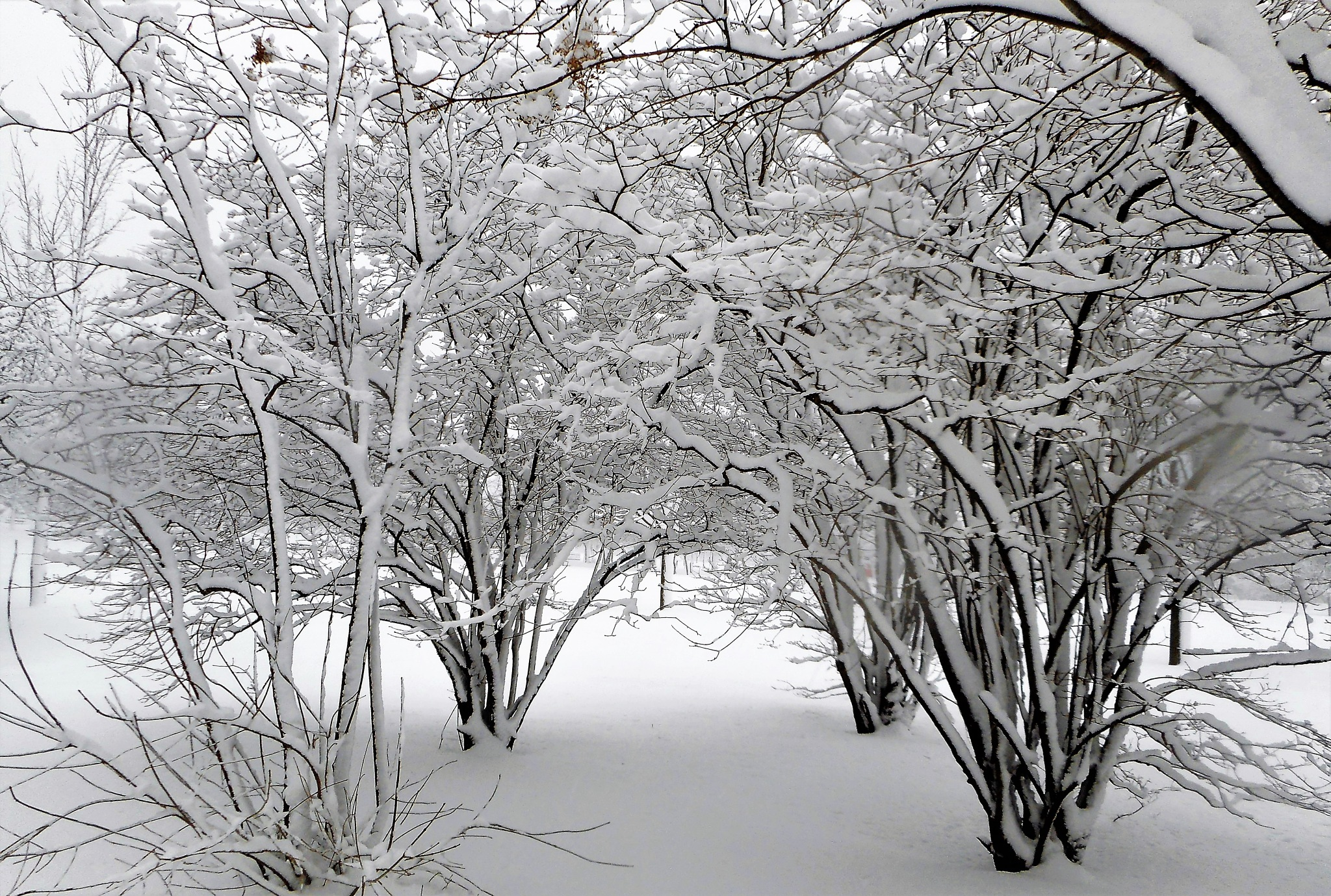 winter tunnel by Nicole Bergeron