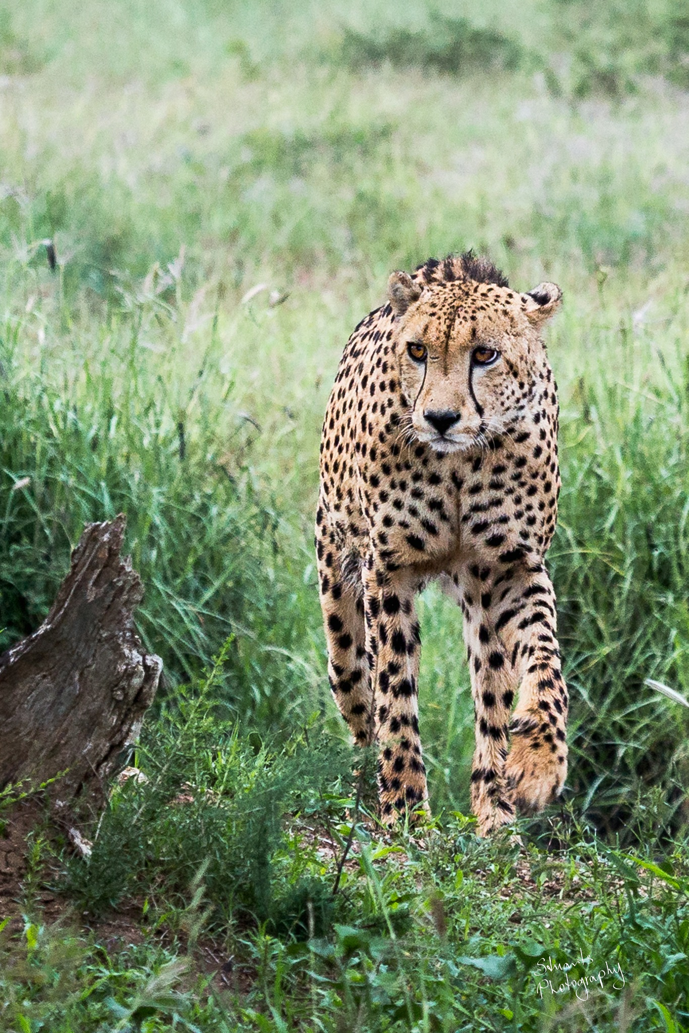 On the prowl by Stuart Jamieson