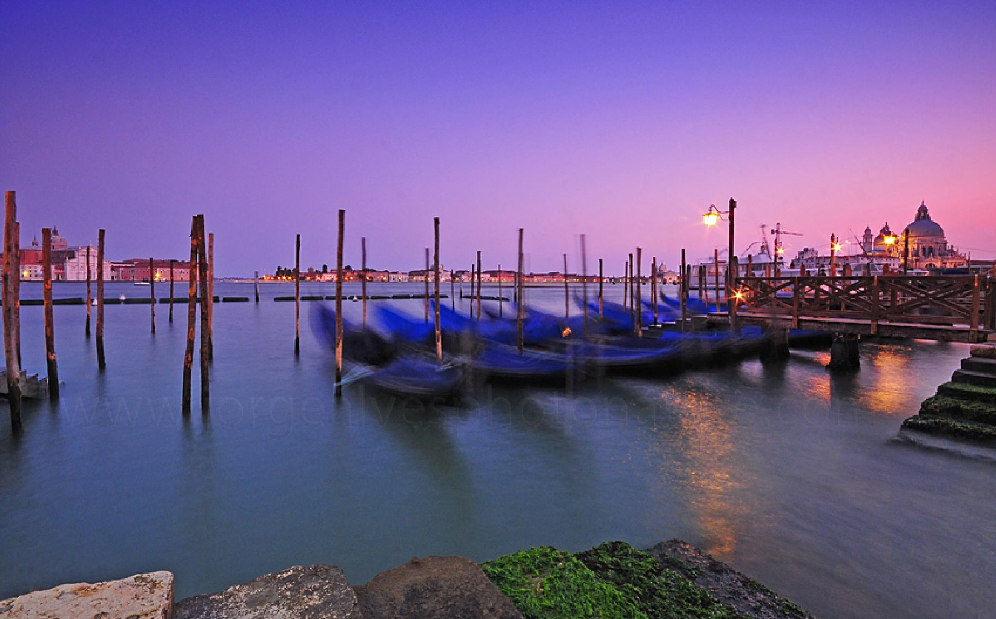 Venice by wild