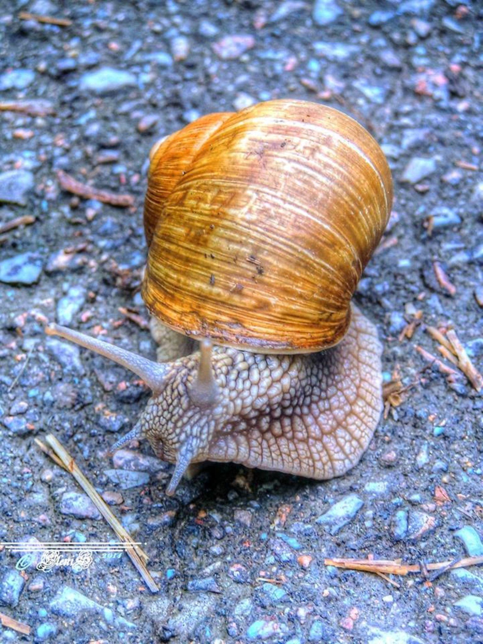 Miss Snail 2014 by Elena Nischik