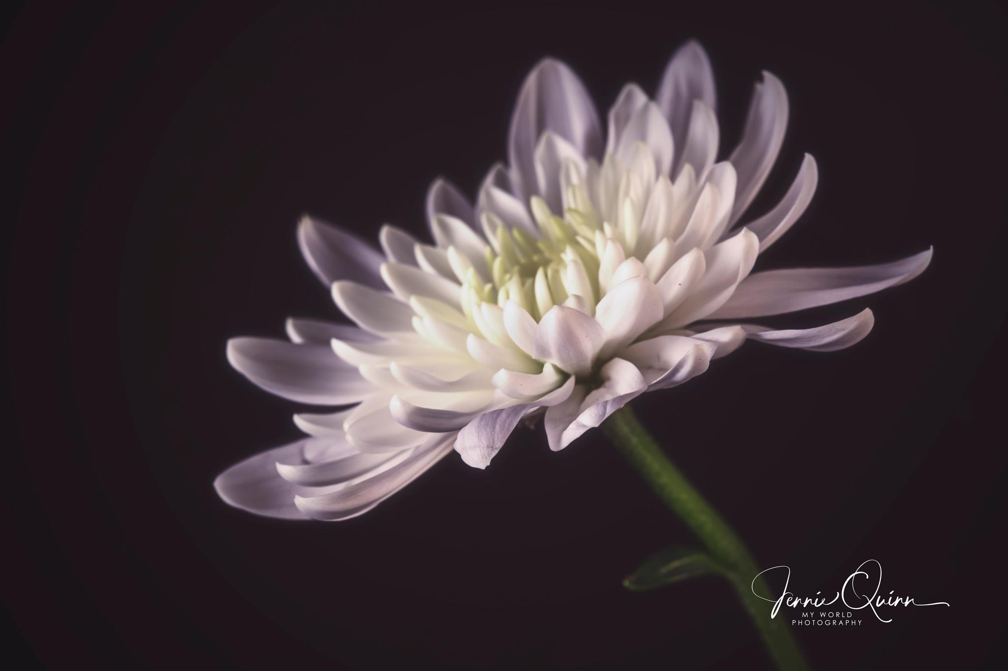 Petals by Jennie
