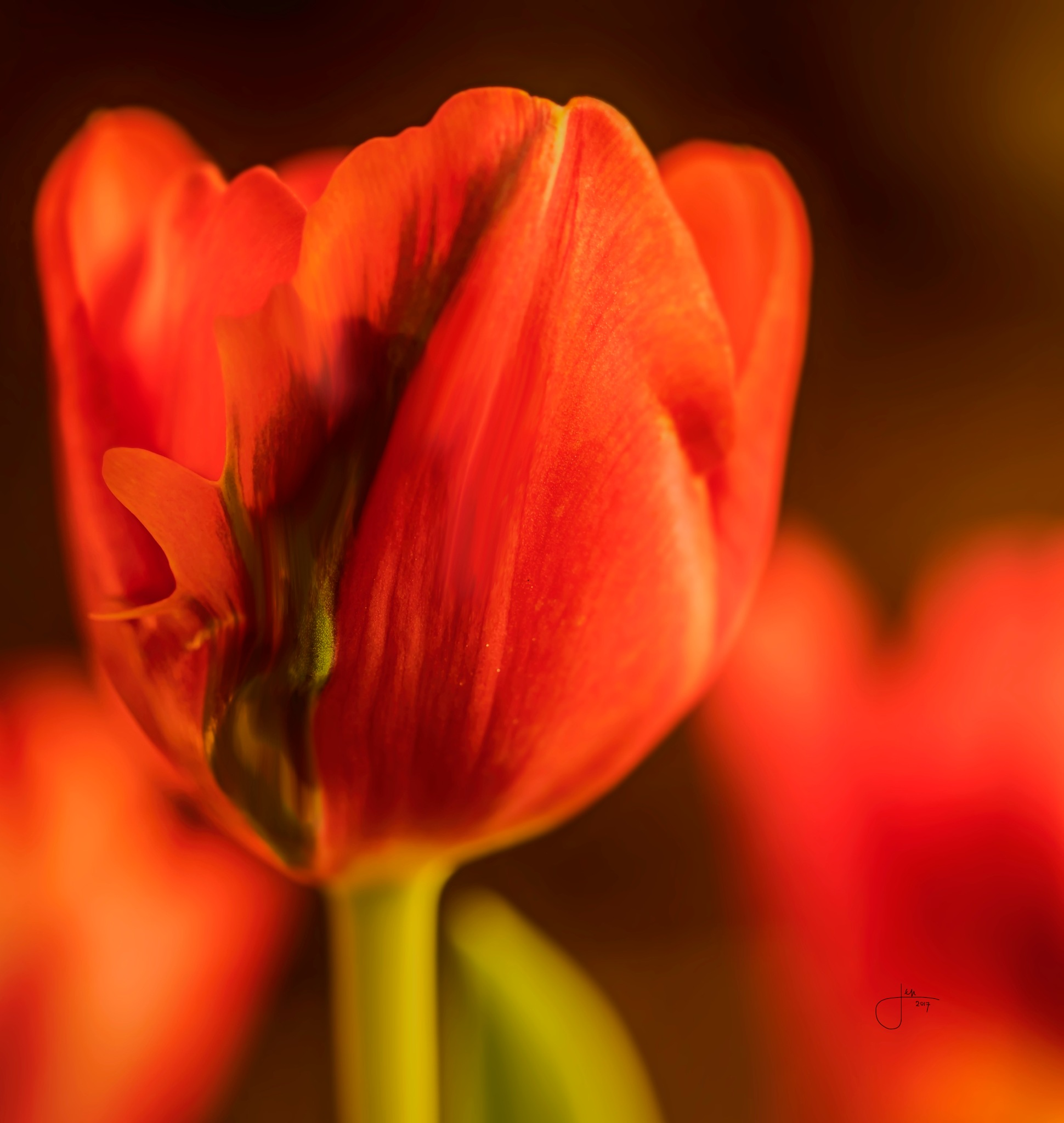 Tulips in Summer by Jennie
