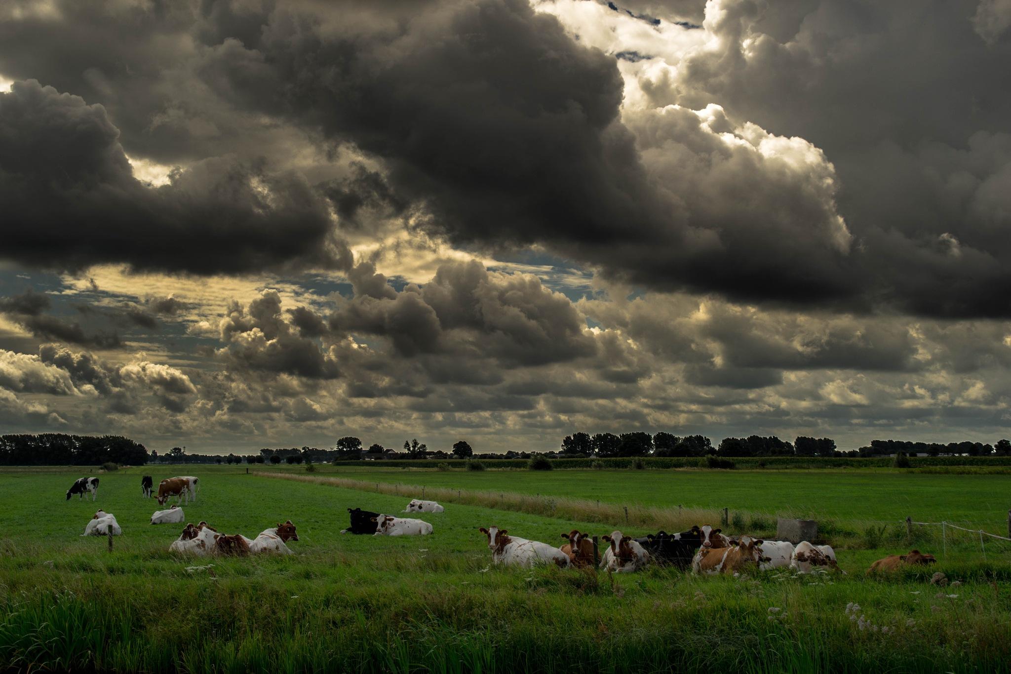 Holland: lazy ladies by Roy Maas