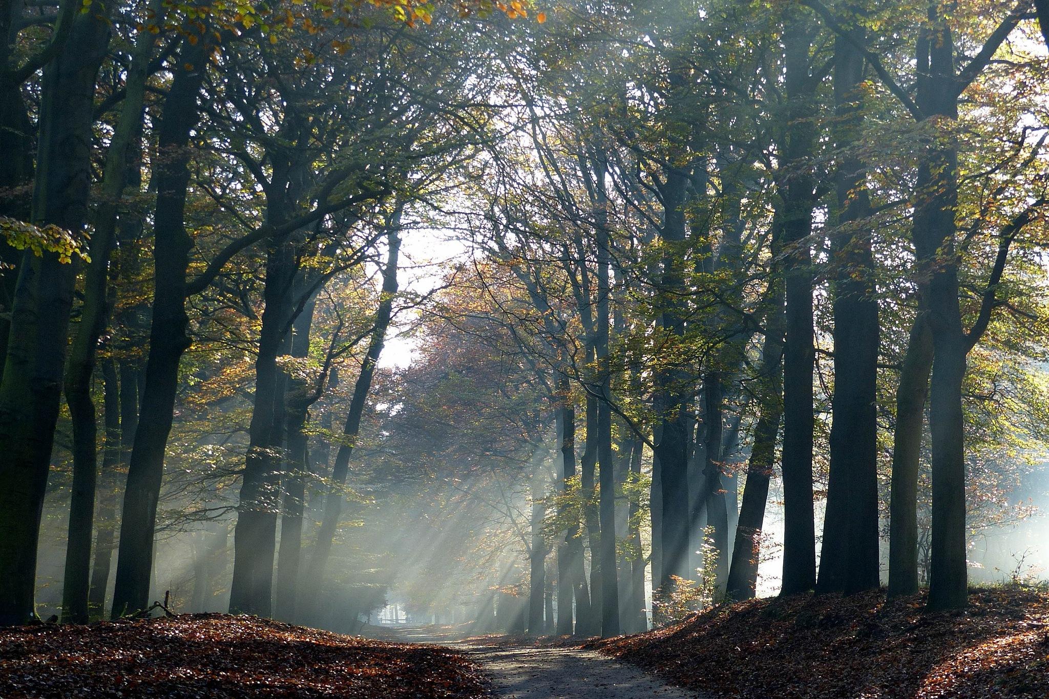 Holland: Sunbeams at national park Postbank by Roy Maas