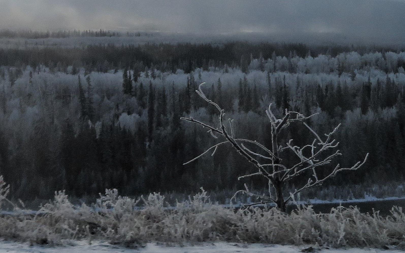 Frosty morning by susan soderstrom