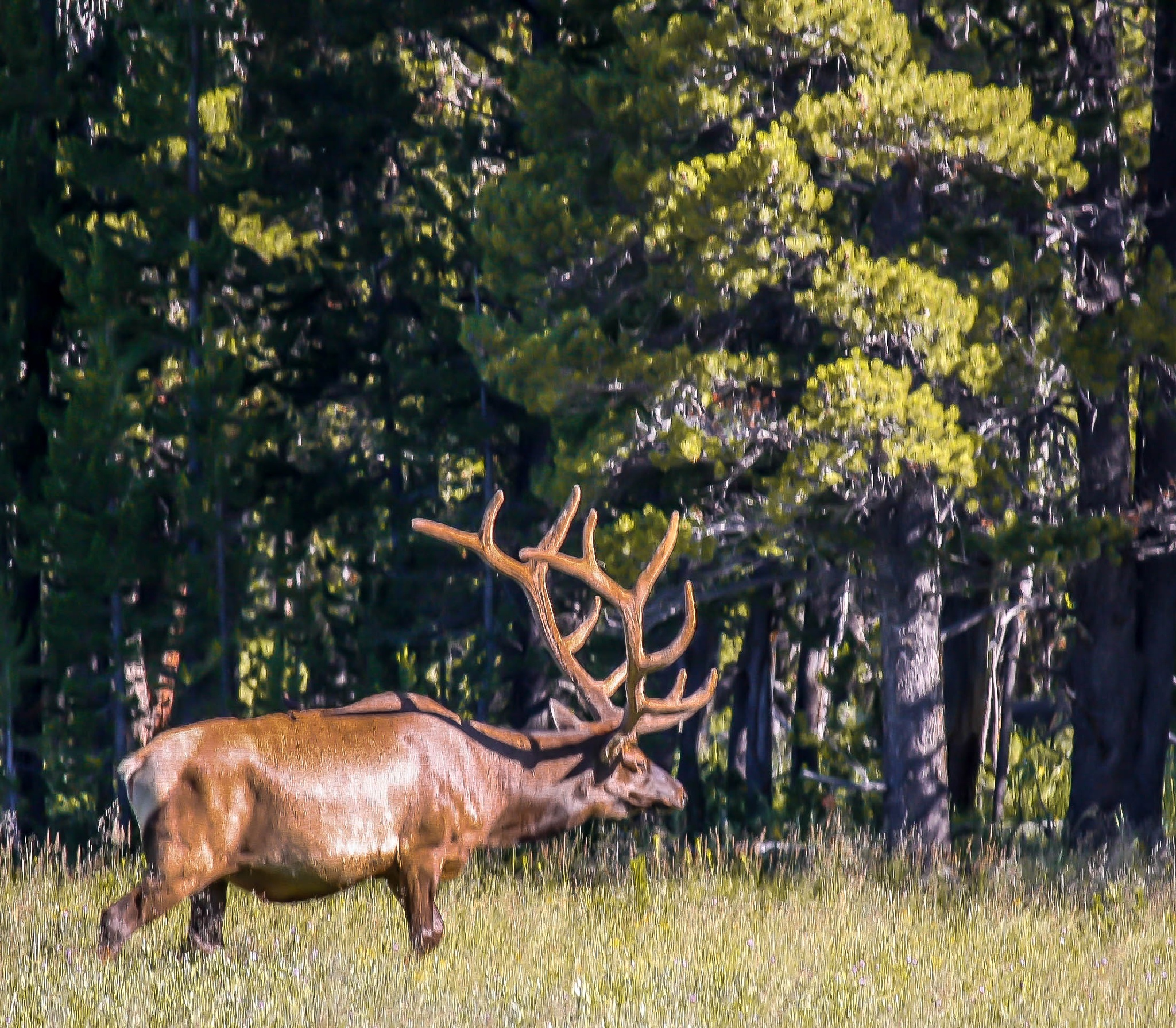 Those Are Some Antlers !!! by Peter Cavaliere
