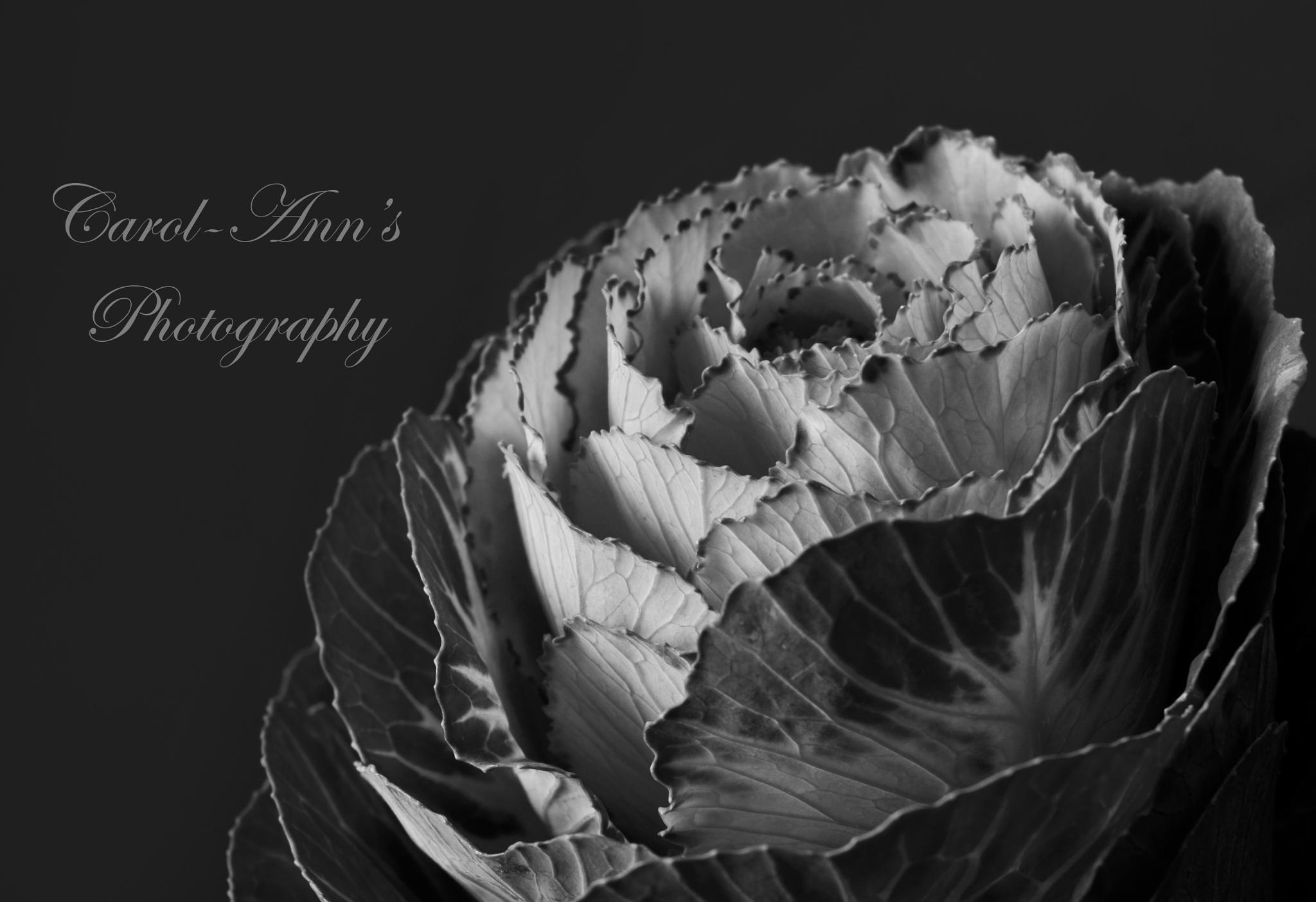 Oh Flower by Coco Grey Photography