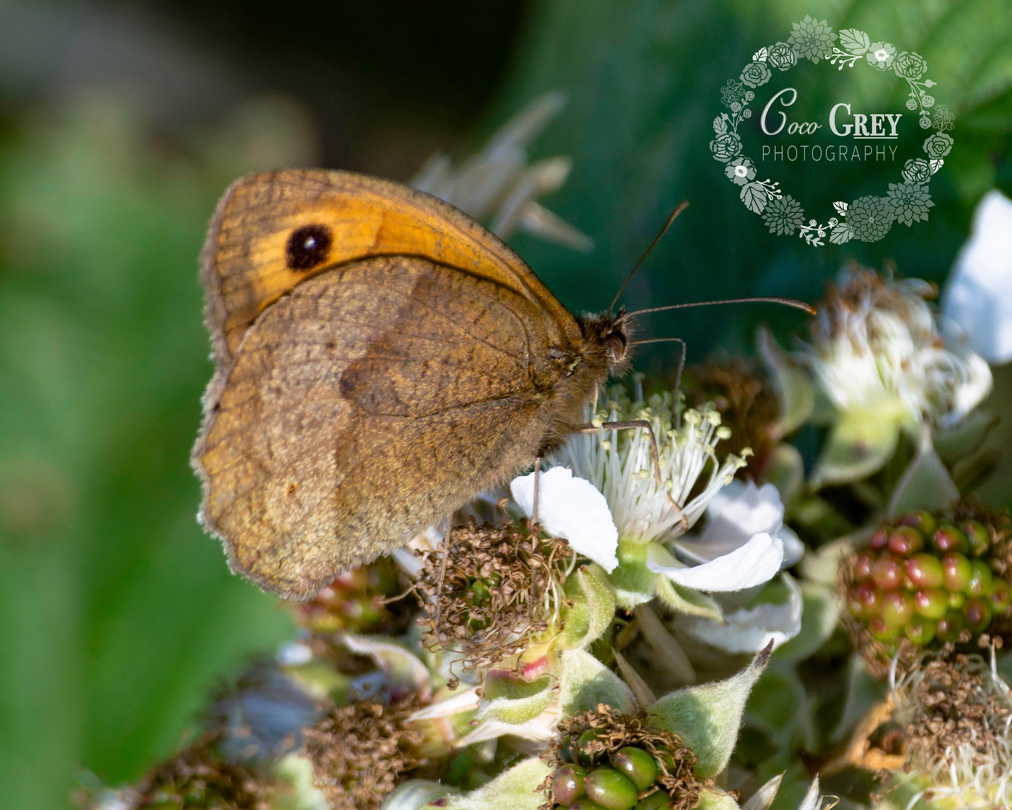Butterfly by Coco Grey Photography