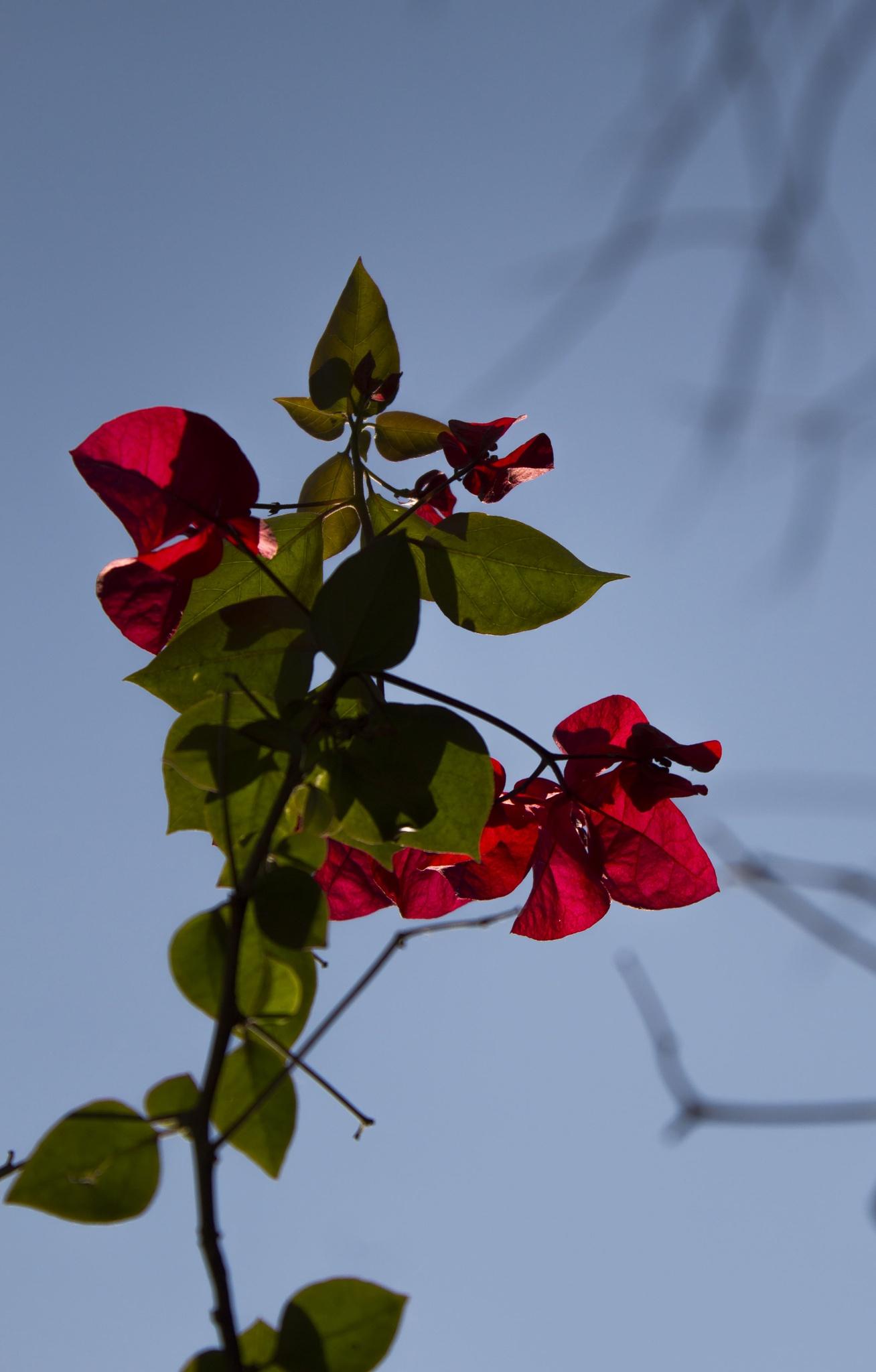 Flowers on trees by Saad Mahdy