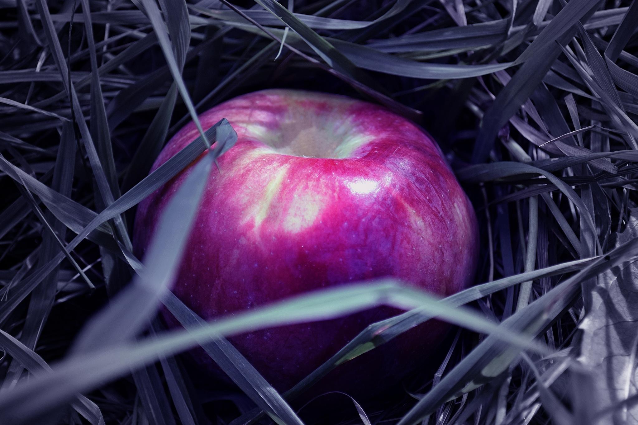 Apple season by Olga Makridina-Bhalla