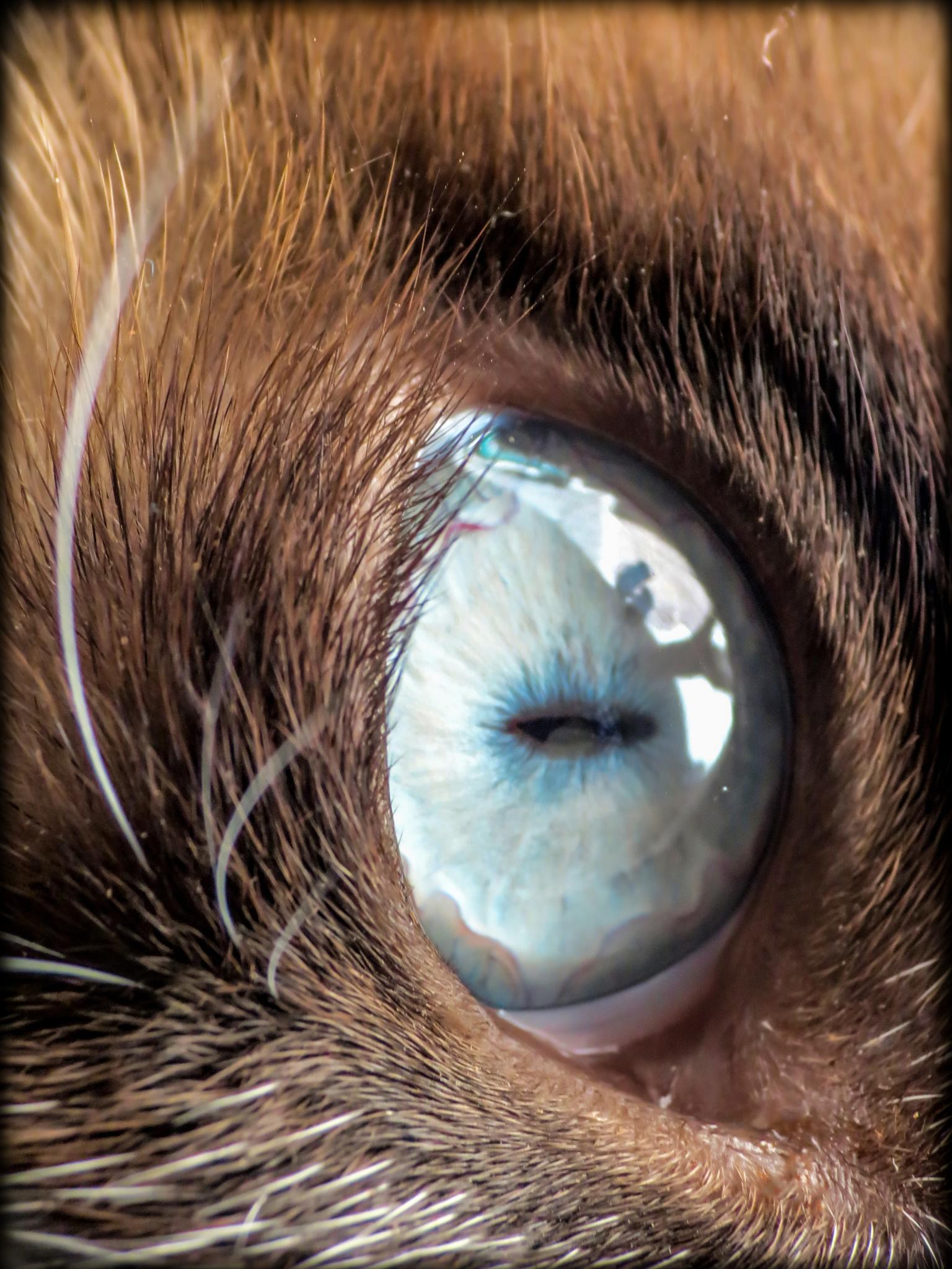 O portal do gato by SidneyZaratustra