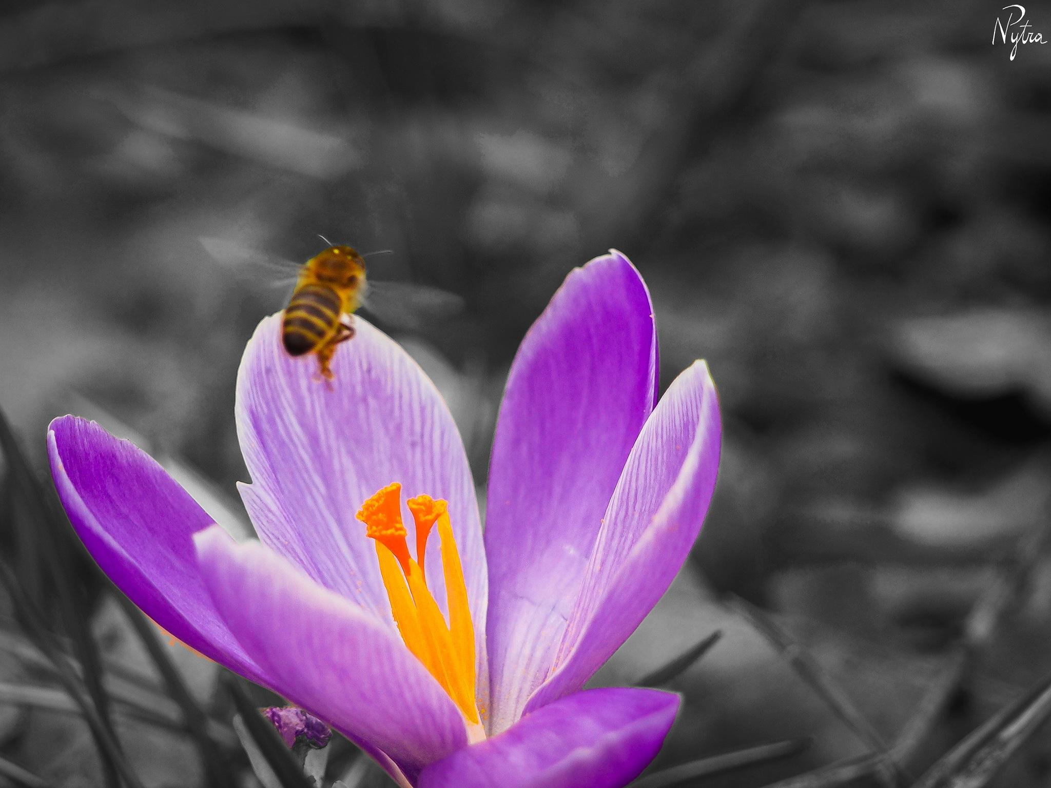 Spring! by Paweł Nytra