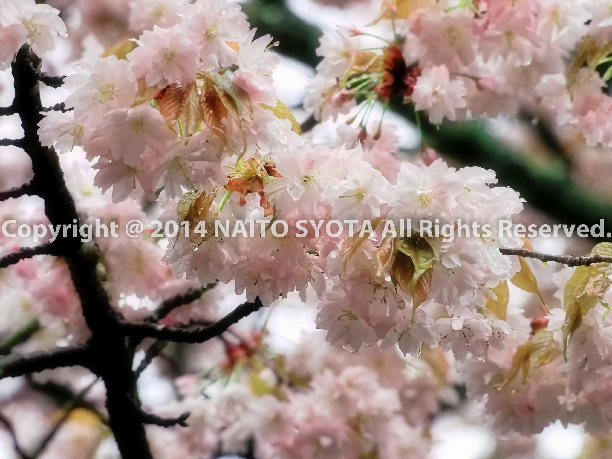 Untitled by naitosyota
