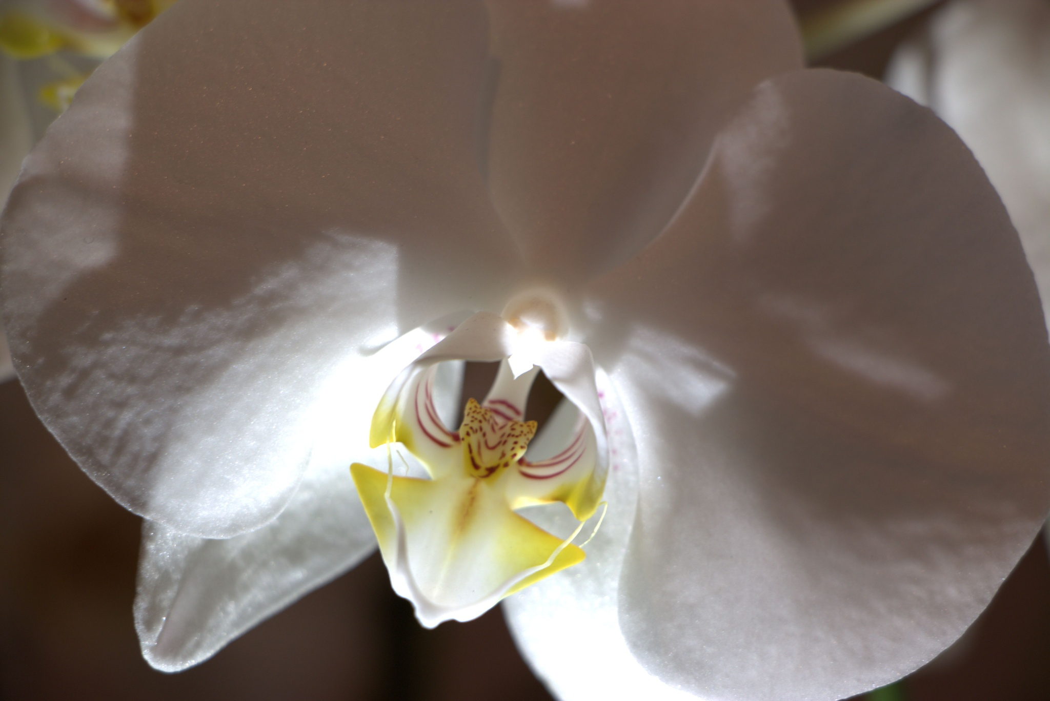 Orchid by Michael McCasland