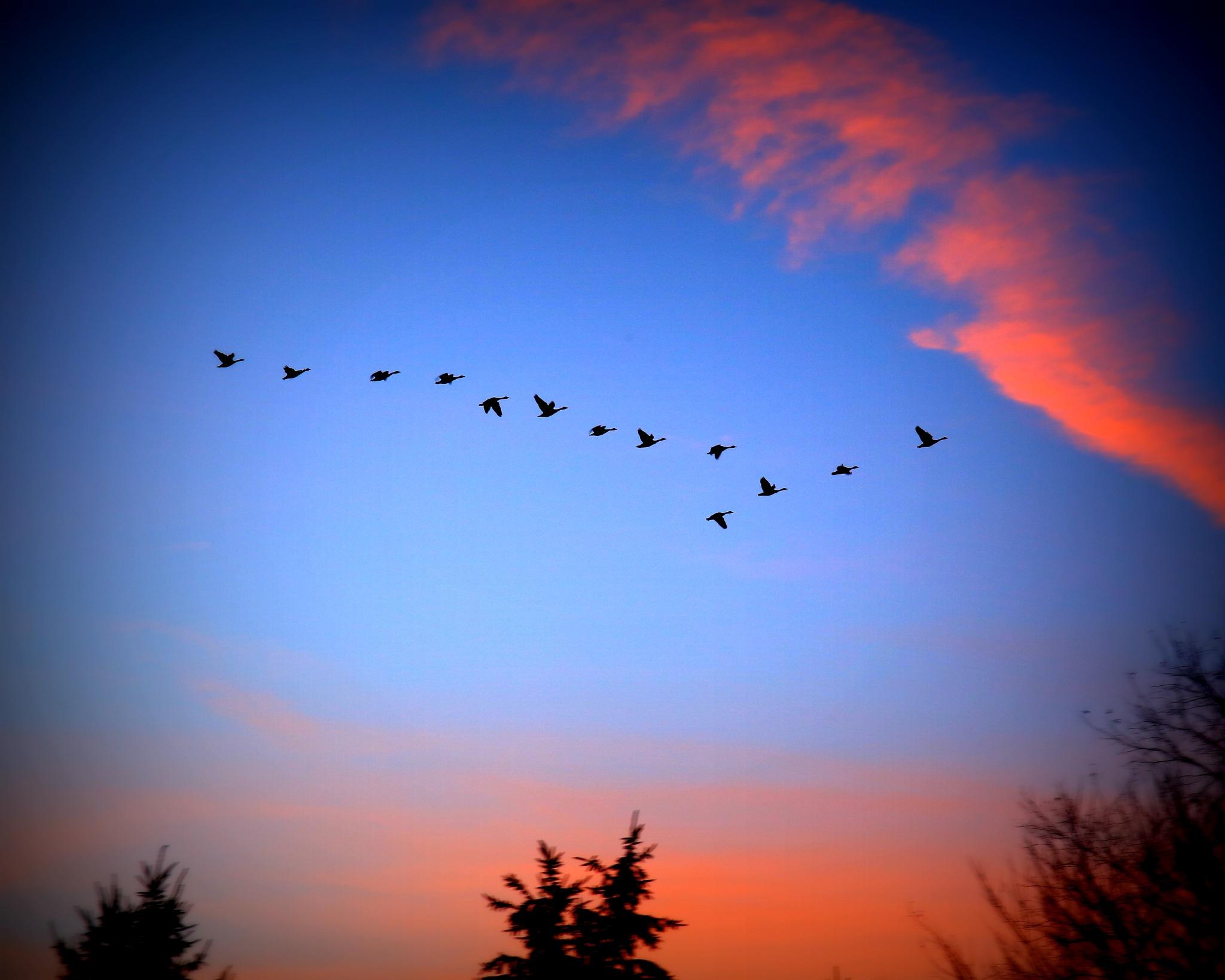 Dusk Flight by renman1