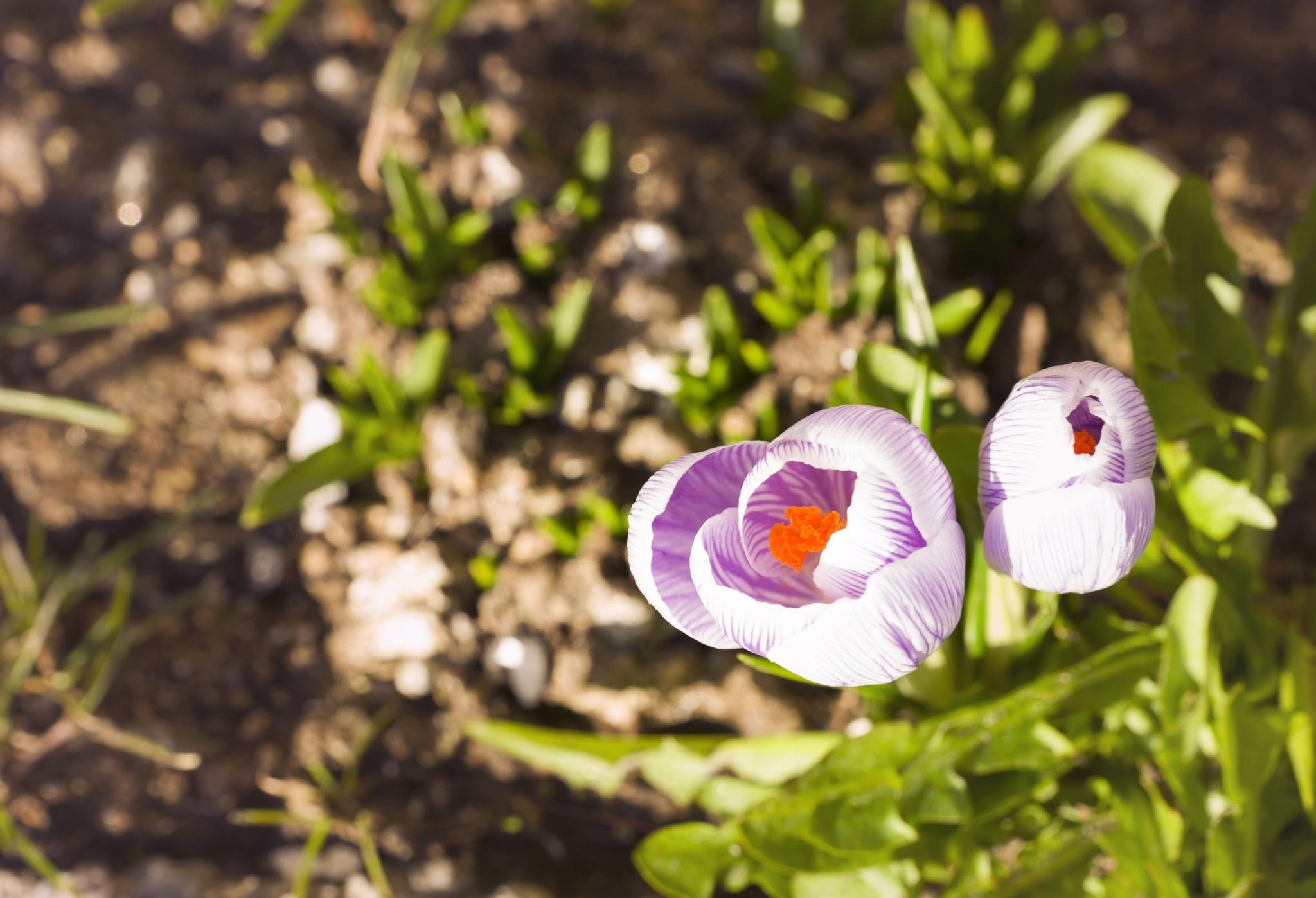 flower by LBoro