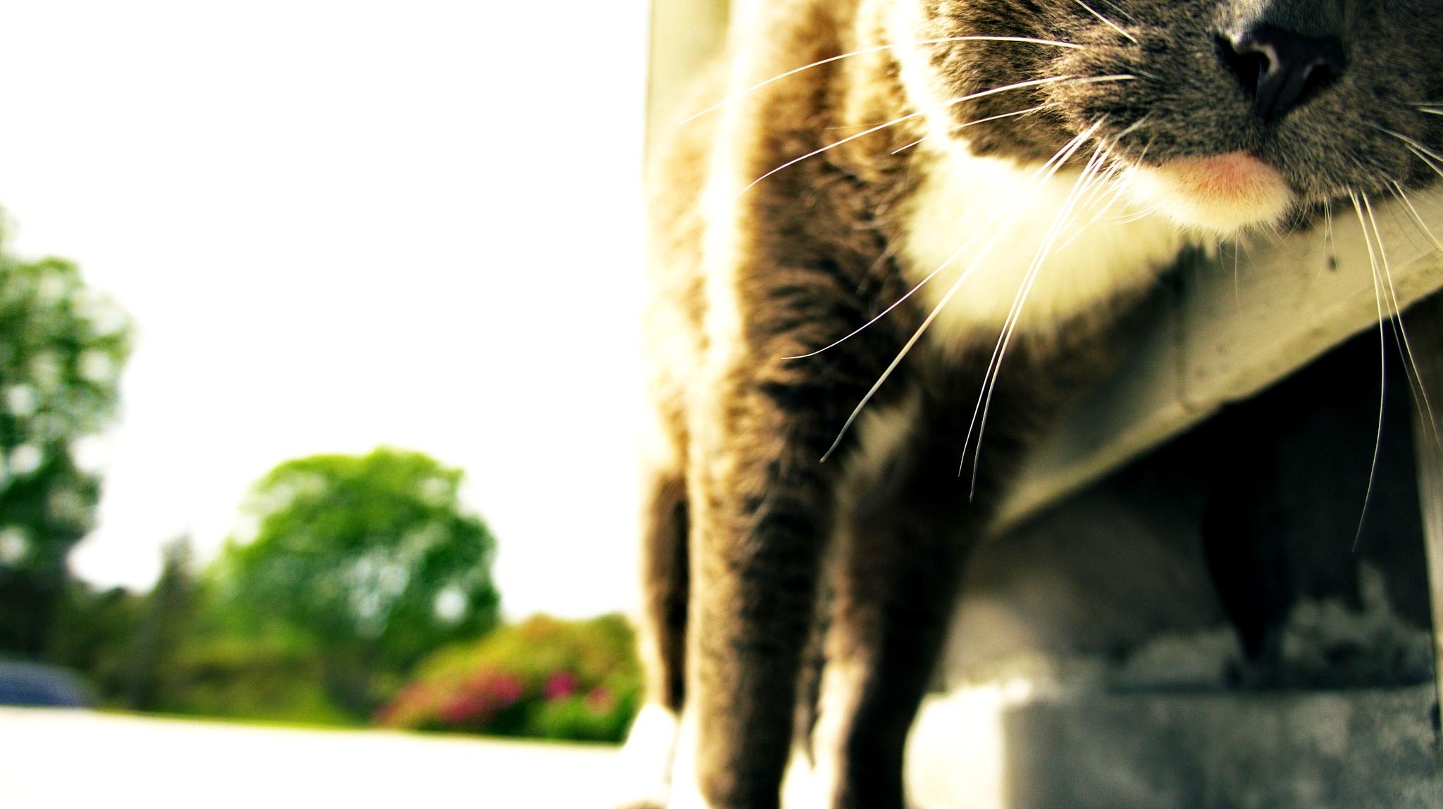 cat's mustache by LBoro