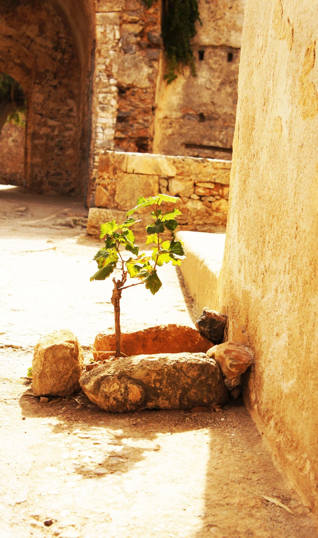 plant 2 by LBoro