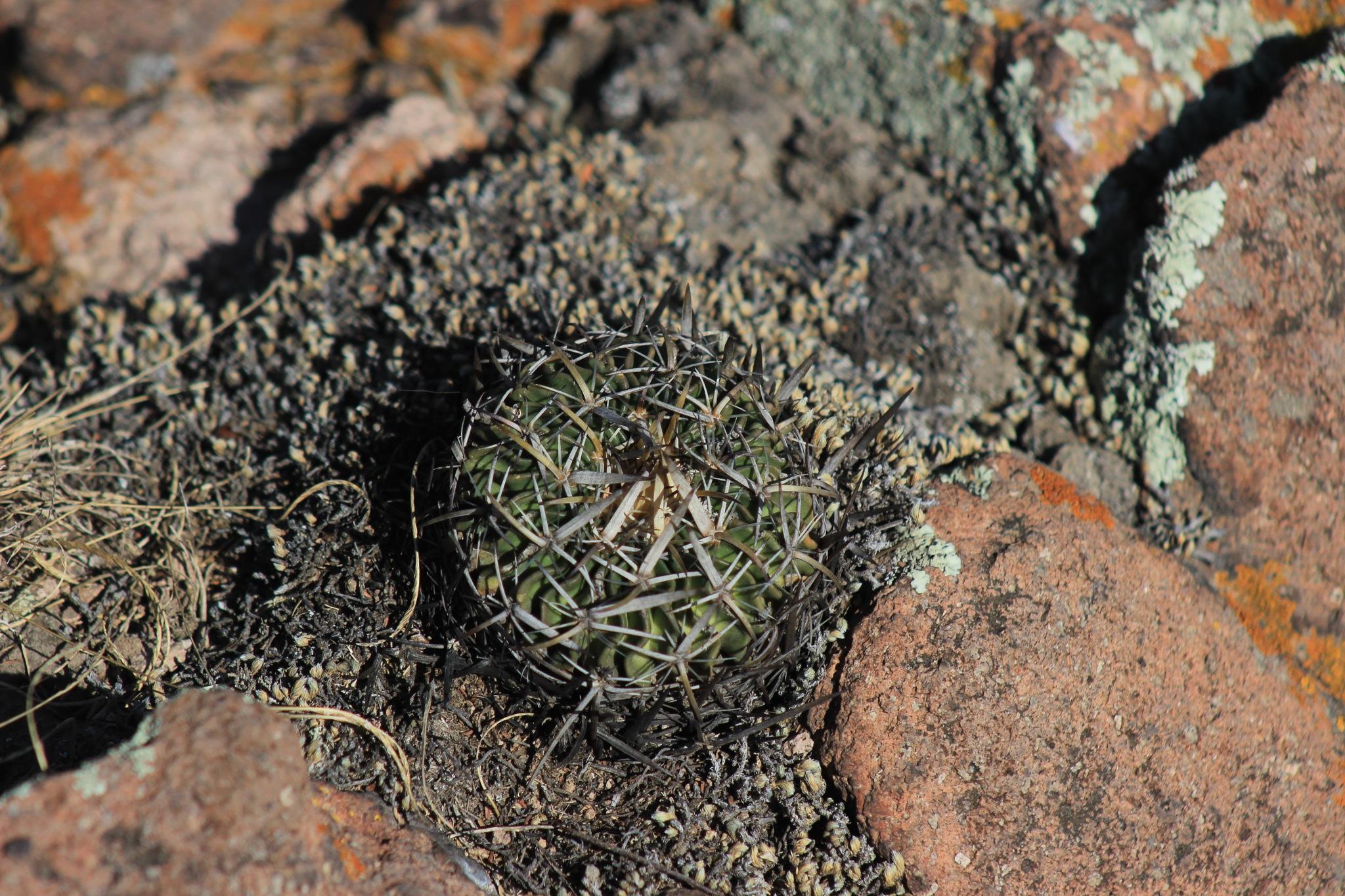 Cactus by Erick Cortés Cueto