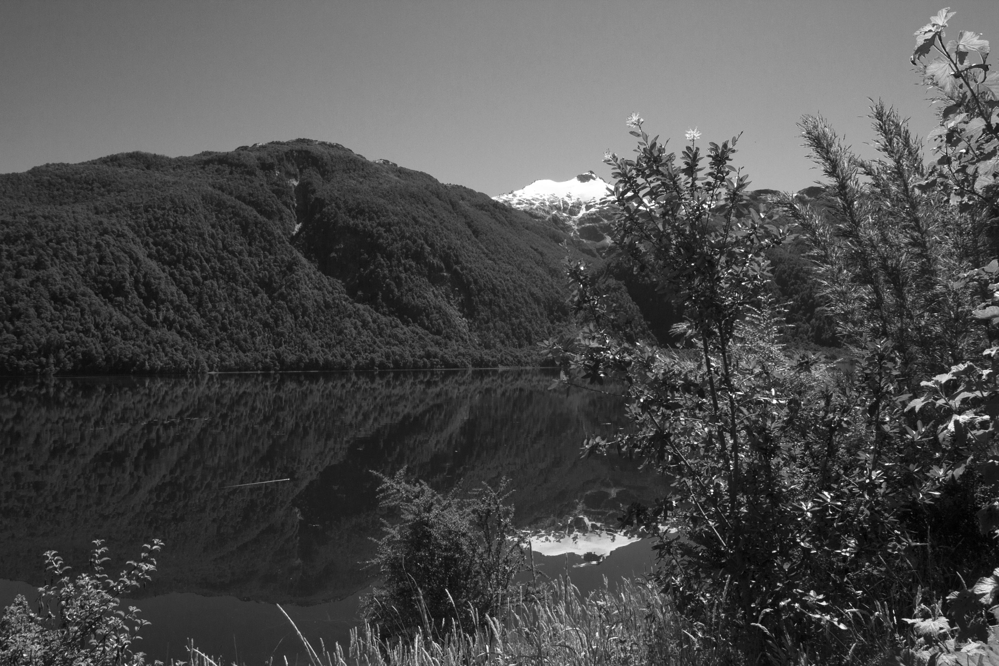 Reflections by Scottmcc