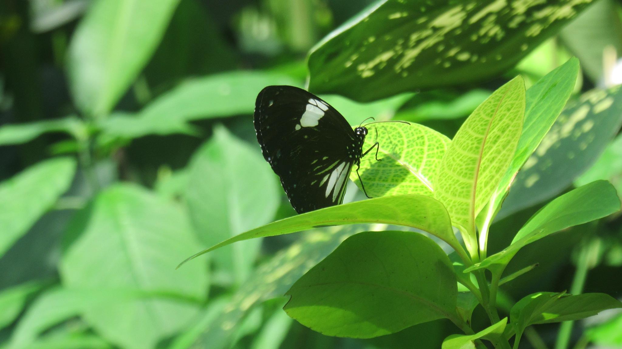 Buttefly Beauty by Matej Plavevski