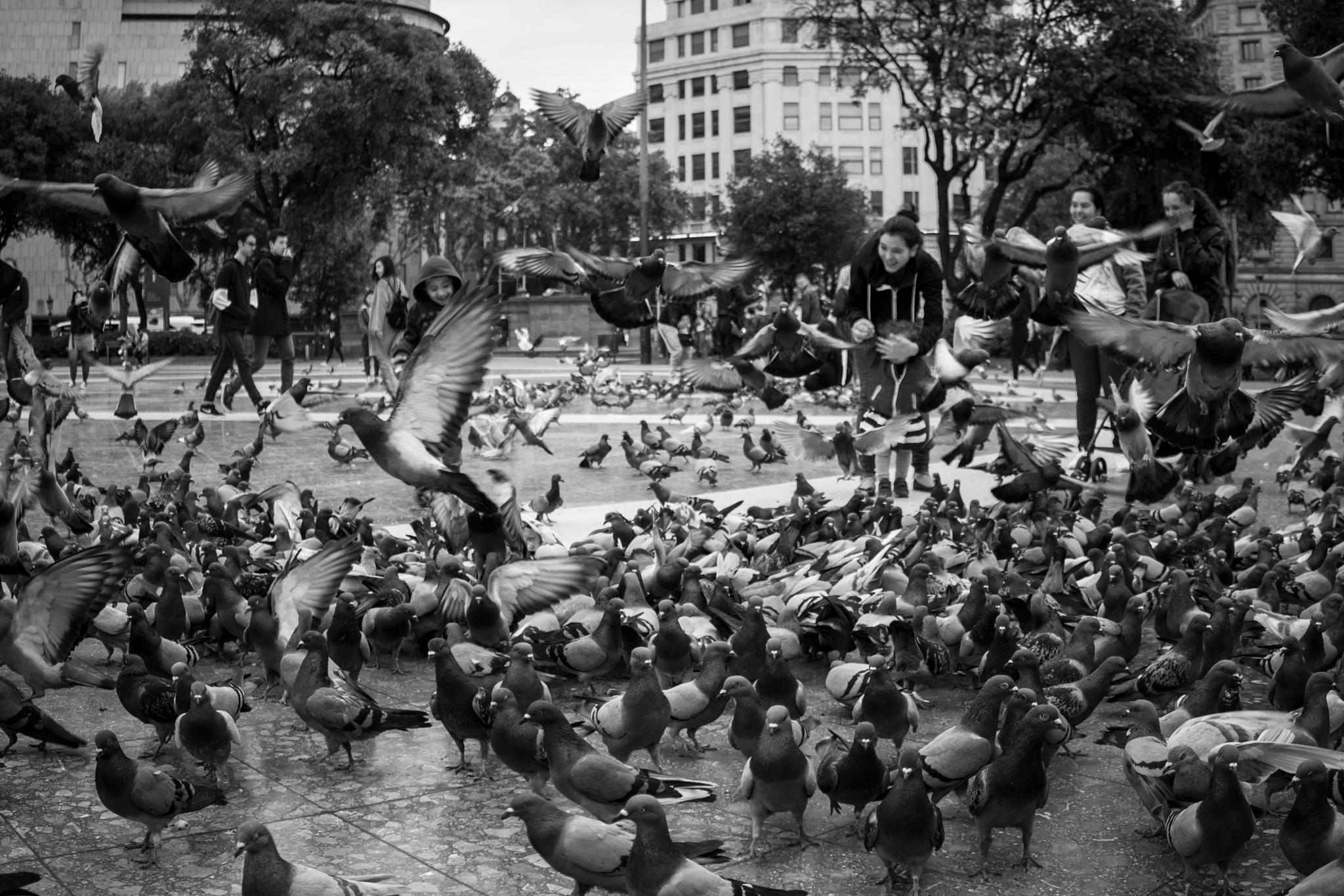 Pidgeons attack - bird chaos. by Juan Luis del Castillo Baquerizo