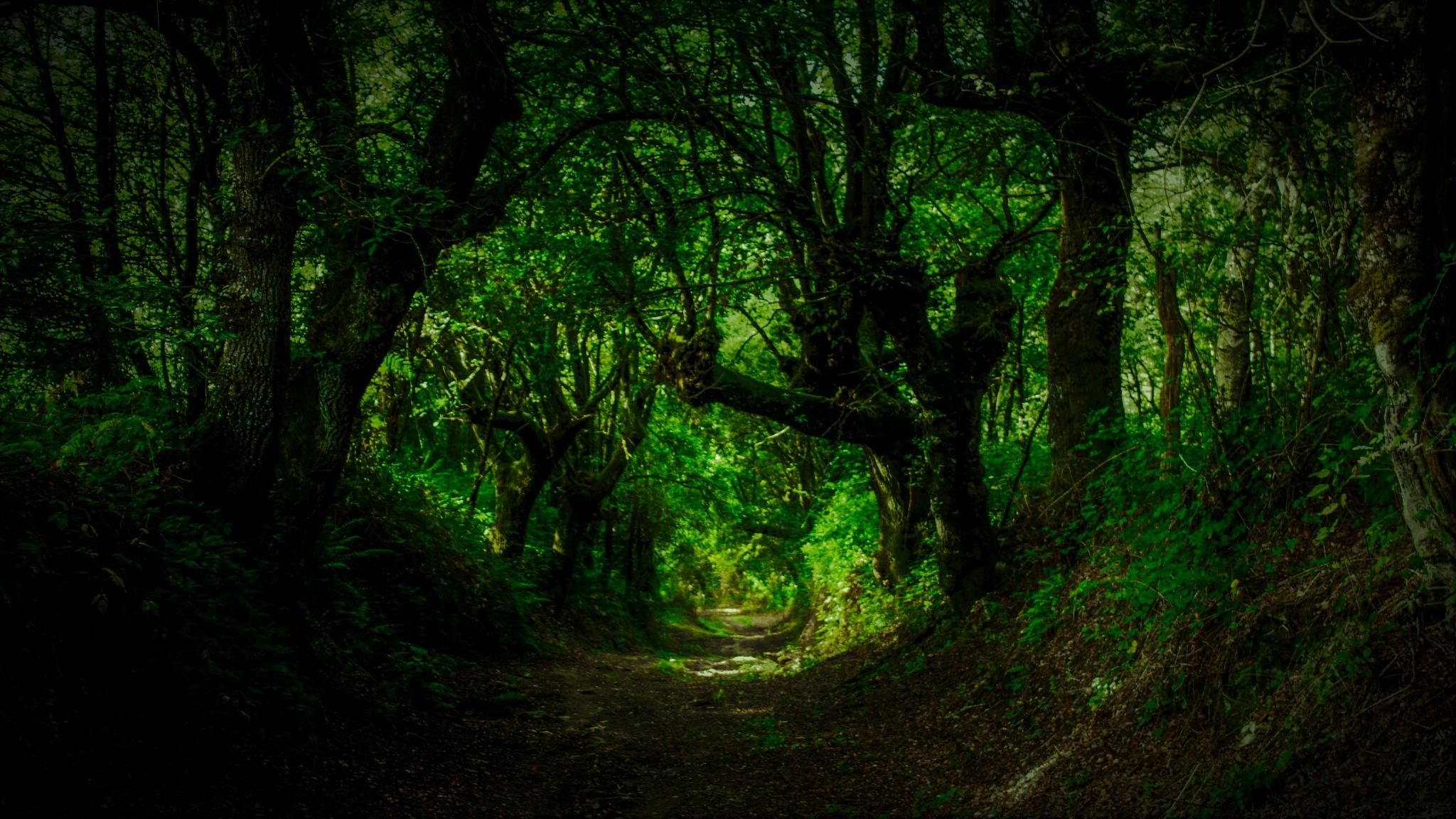 Enchanted forest. by Juan Luis del Castillo Baquerizo