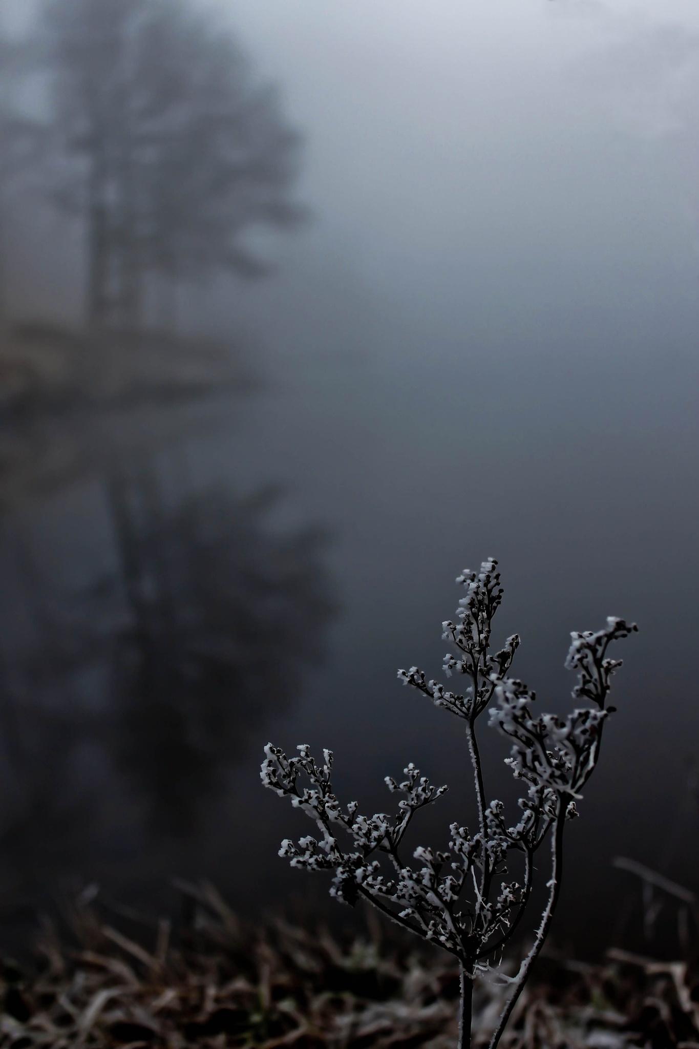 Foggy morning by zabazulu