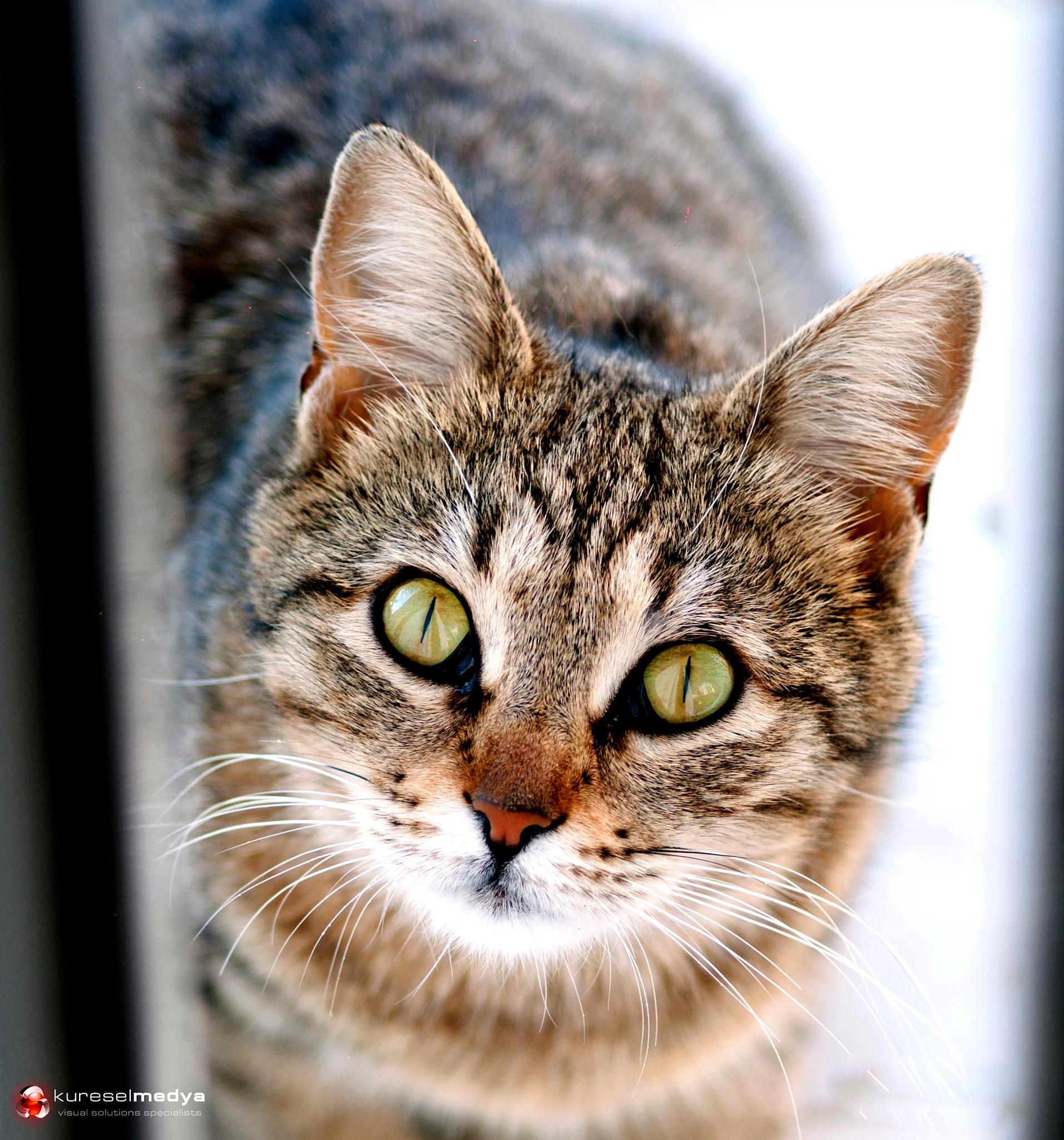 CAT by Tunç Yağdı