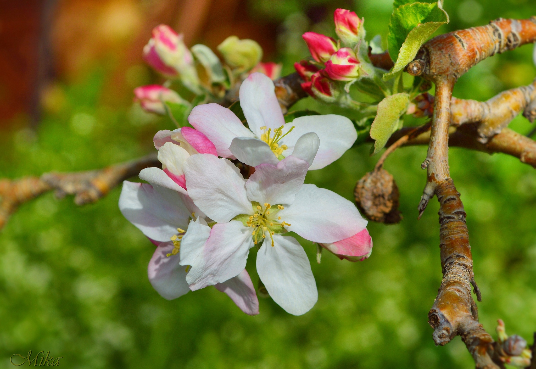 Spring by MamaMika