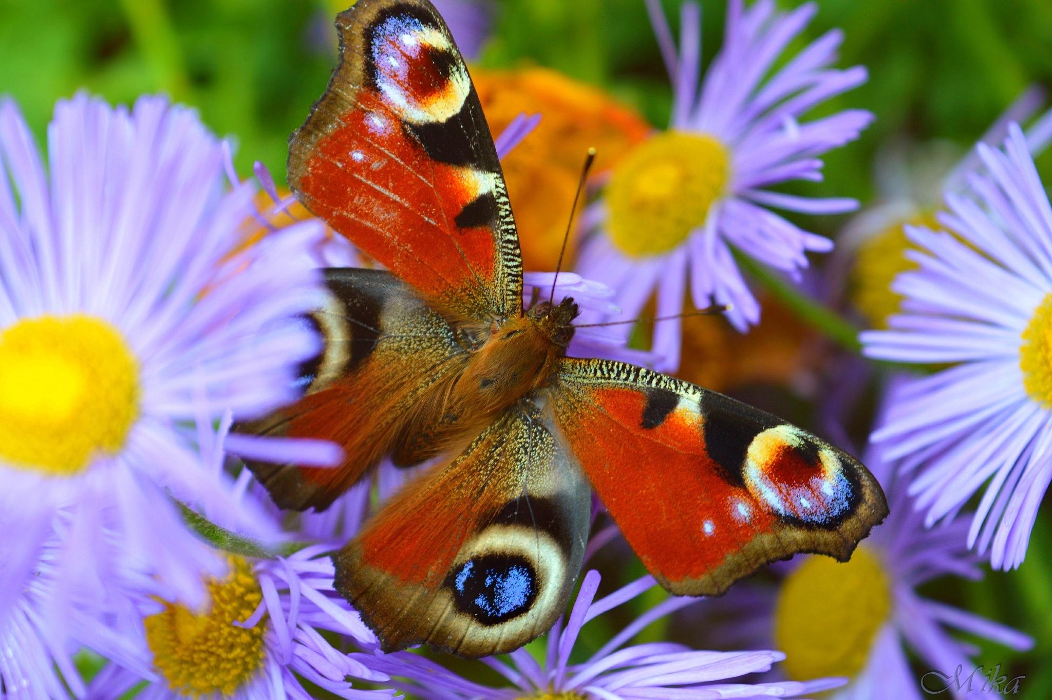 Photo in Random #butterfly