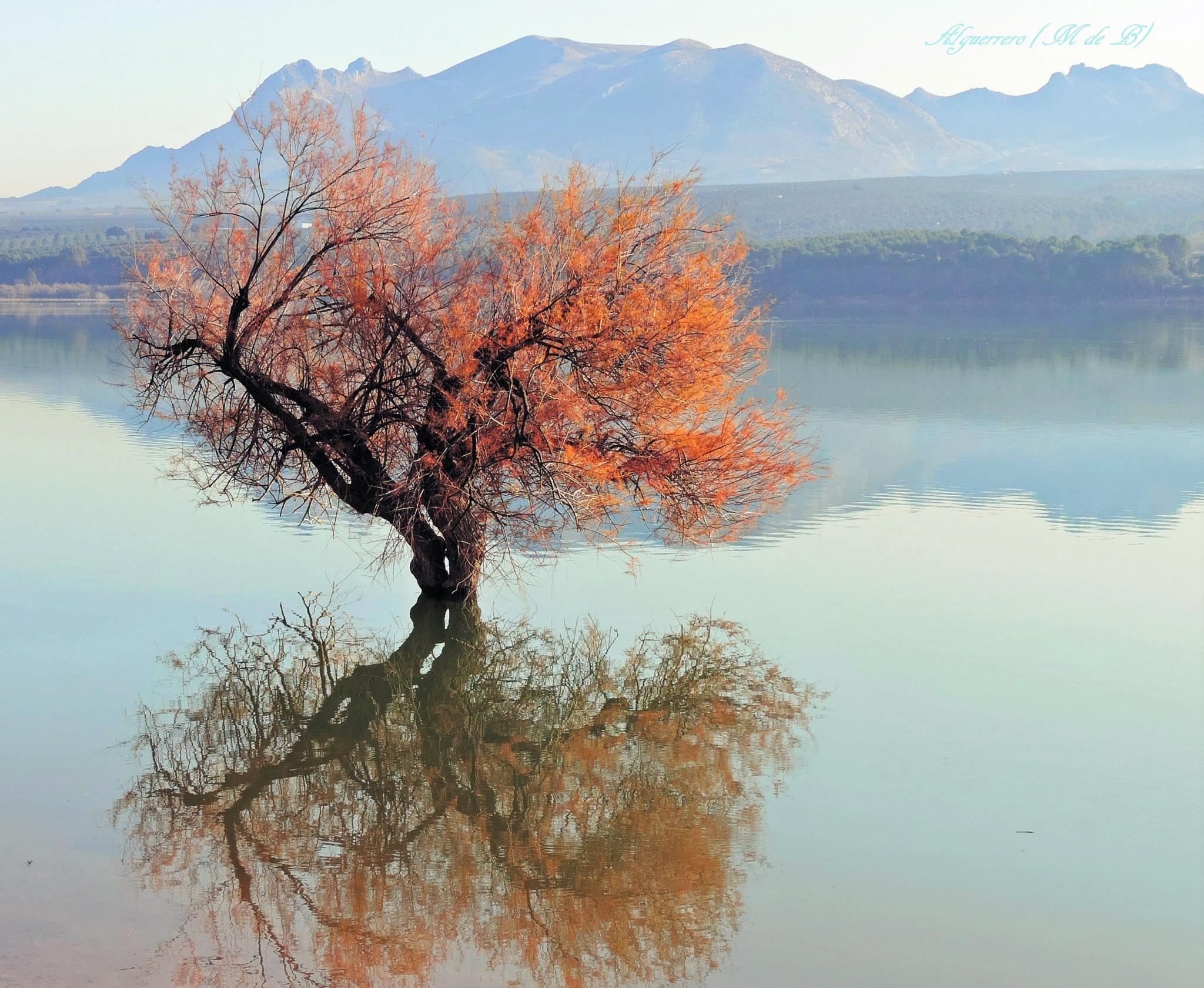 El árbol del pantano. (Swamp Tree) by Angel L. Guerrero.