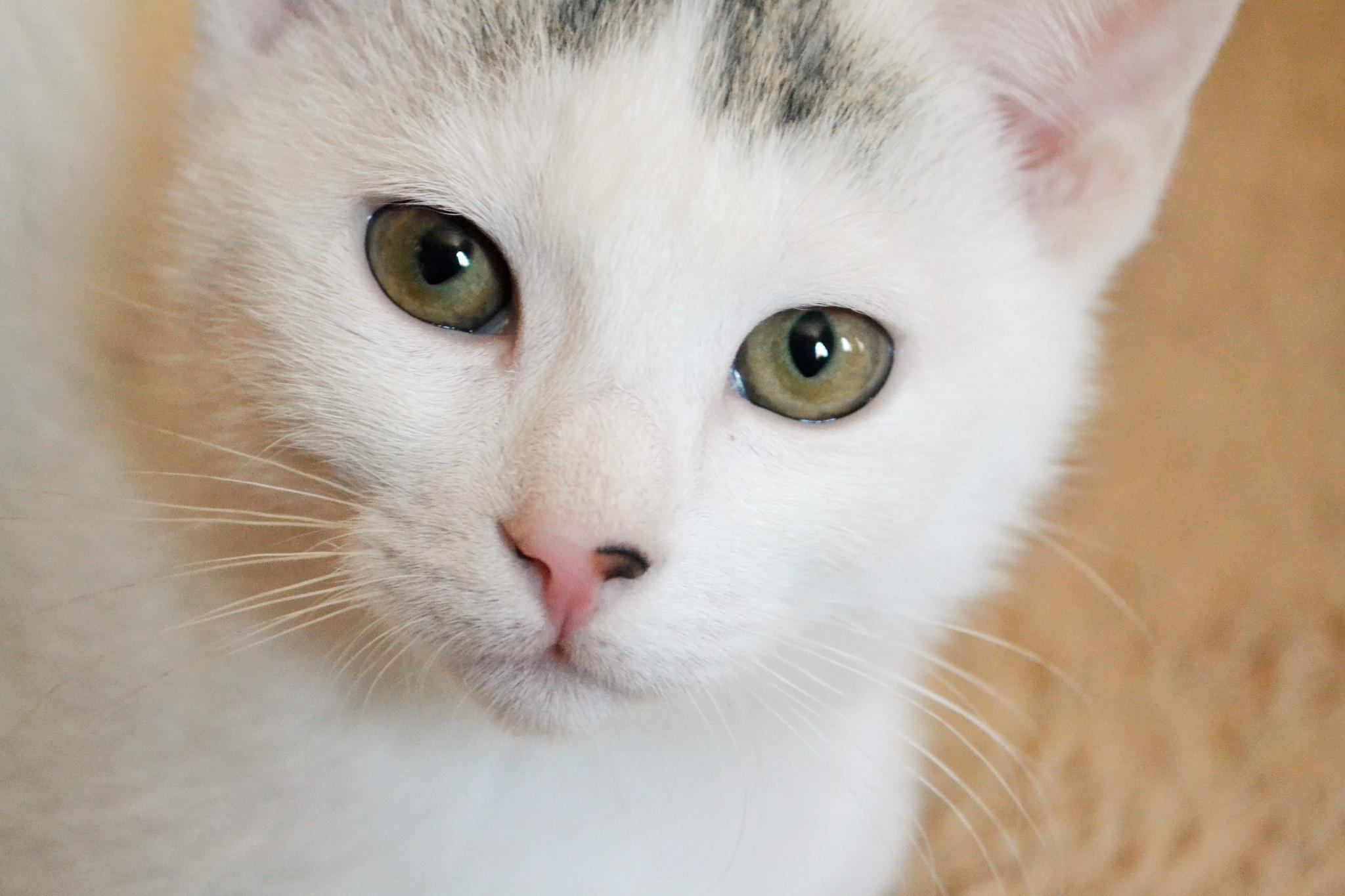 Kitty Finn  by LeeAnn Vigeant