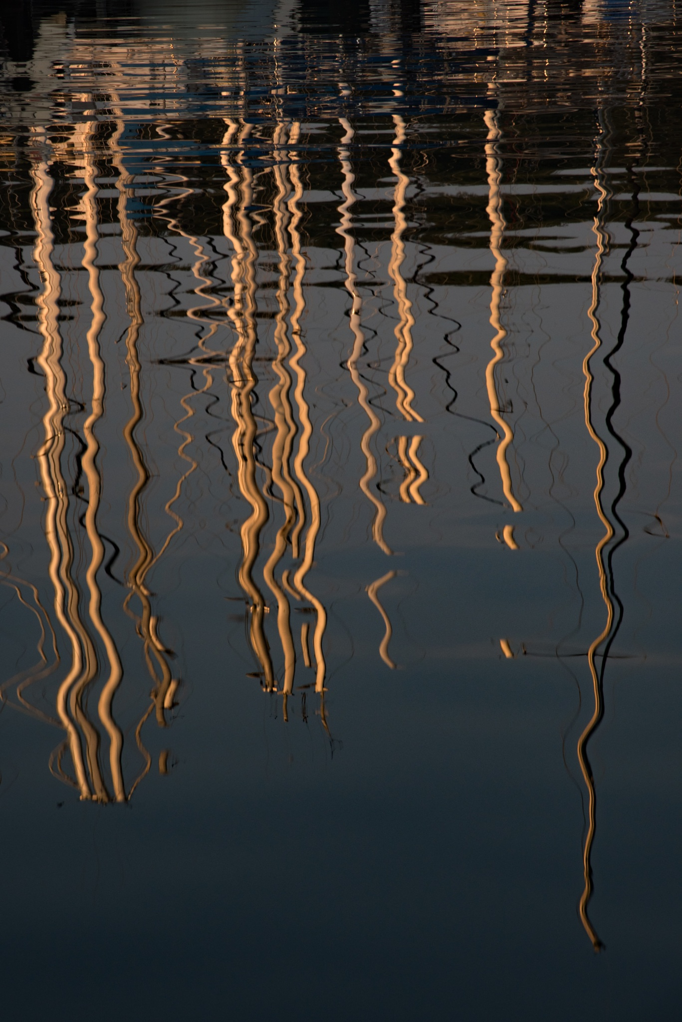 Reflections1 by Neels deConing