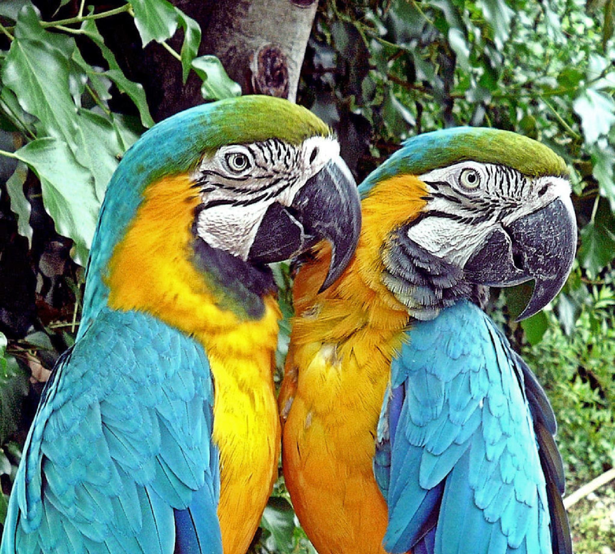 blue macaw by Maria Clara Eusebio
