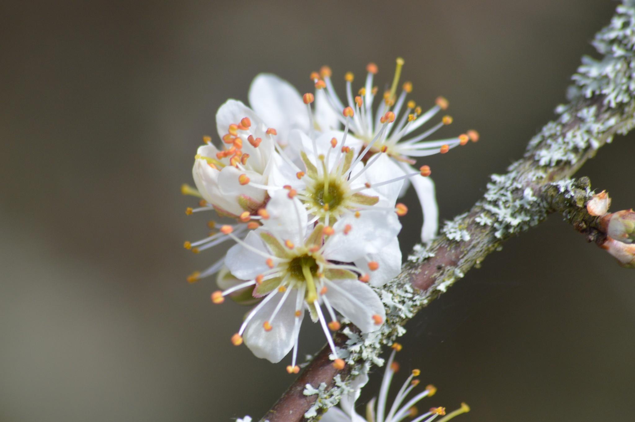 spring as sprung by ntec01