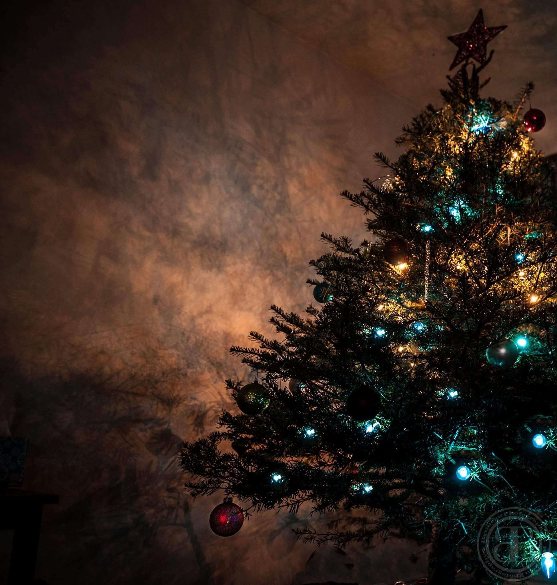 Christmas Tree Shadows  by Britt Bruneau