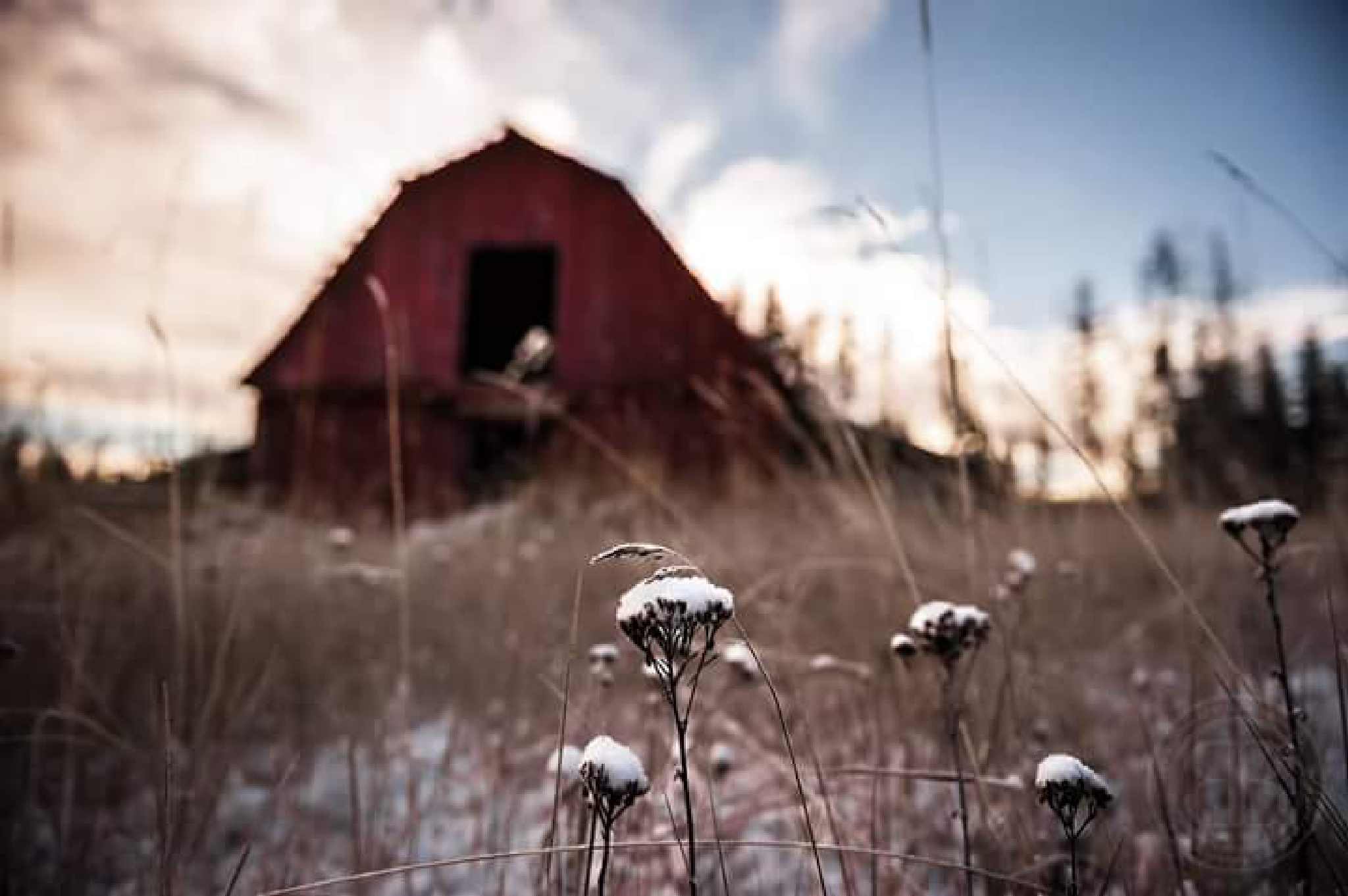 Frozen Mornings by Britt Bruneau