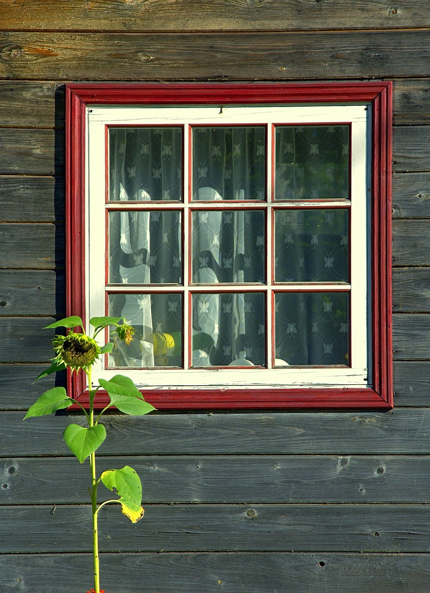 window  ... by andris96