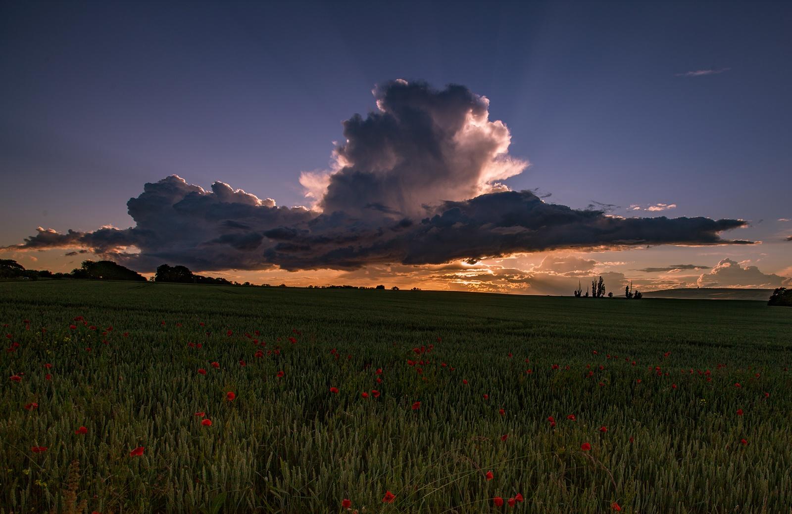 Poppy Field by Stern100