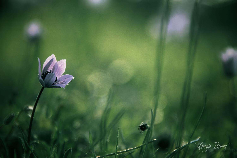 Flower... by Georgia Bounia